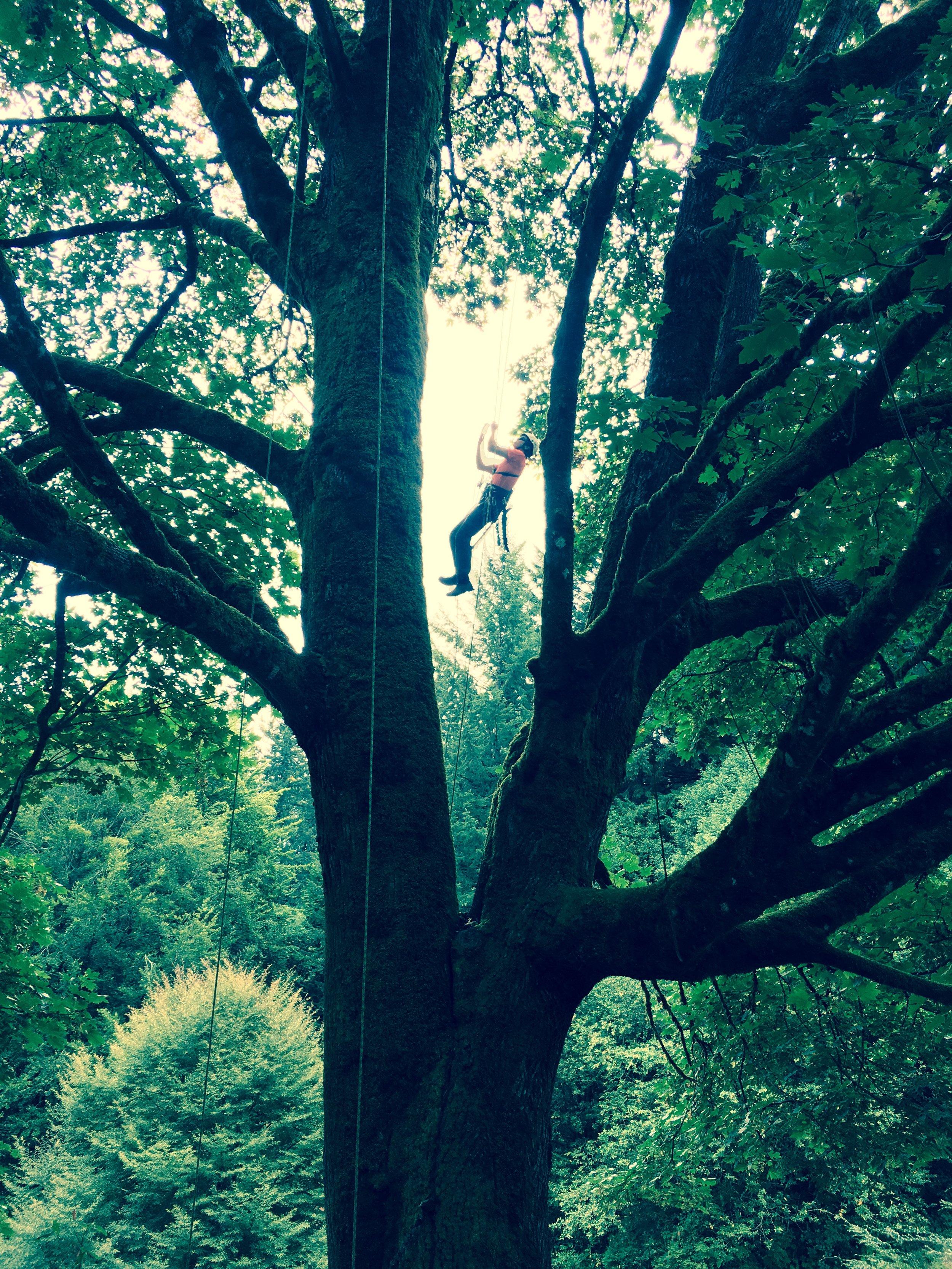 Hoyt Arboretum - Aborists in Arboretum.jpg