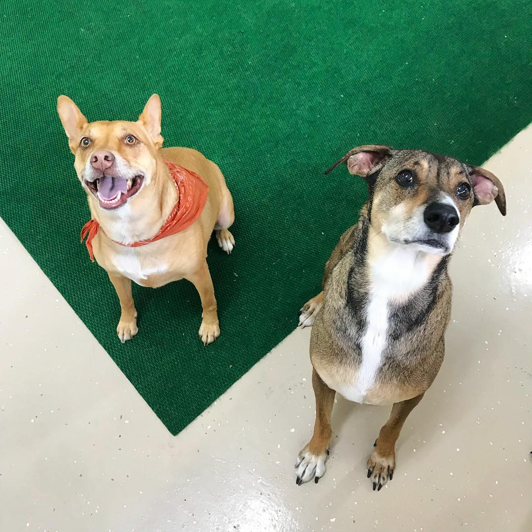 Dog Daycare and Dog Boarding in Missoula, MT