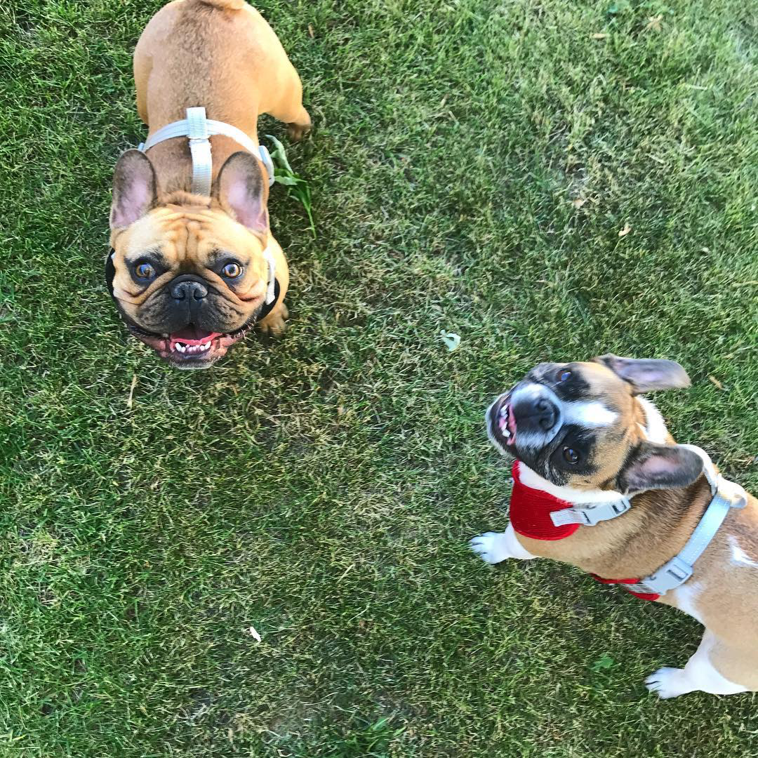 Mylo & Baxter.png