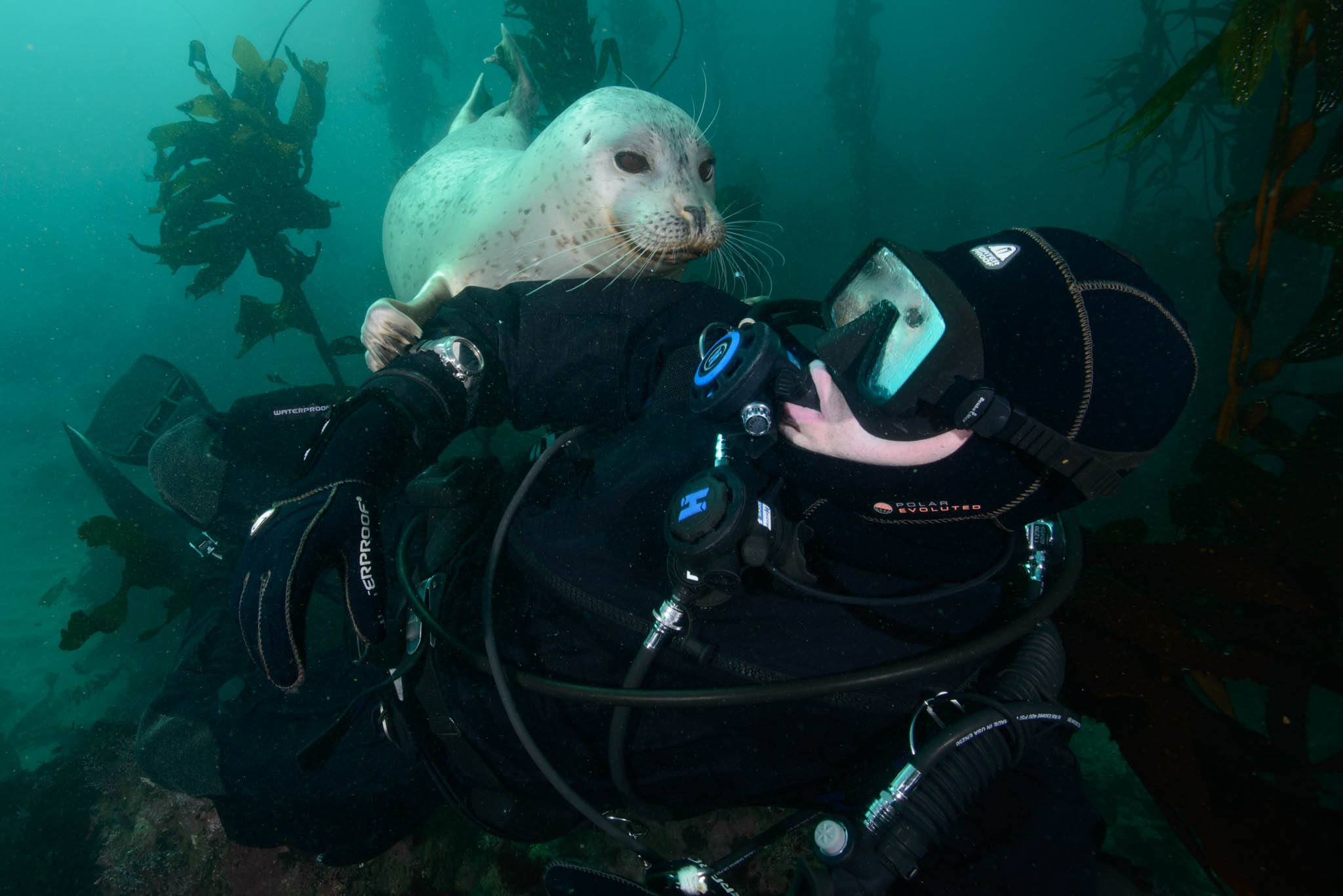 Harbor Seal and Divers
