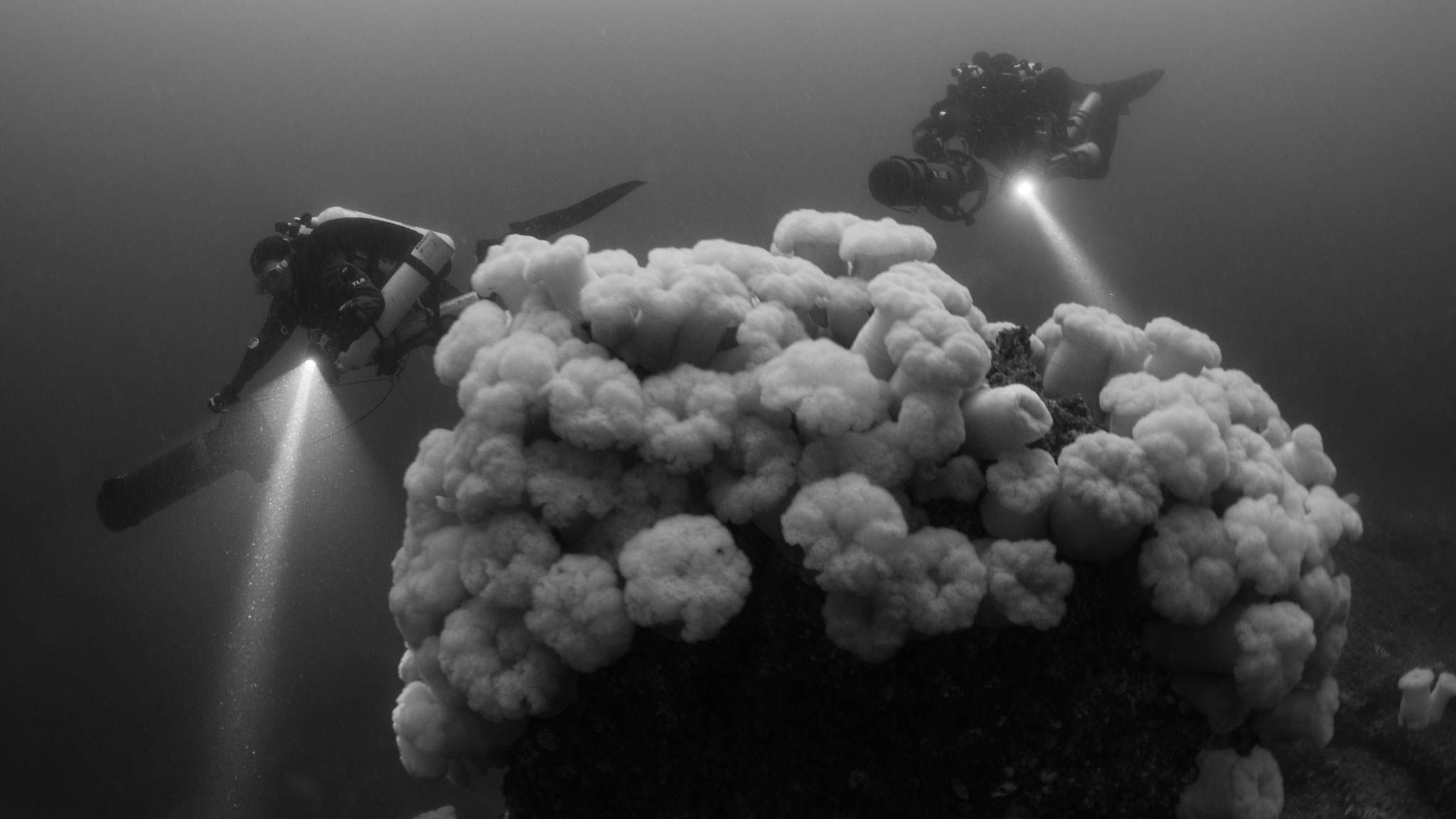 Divers and Metridiums