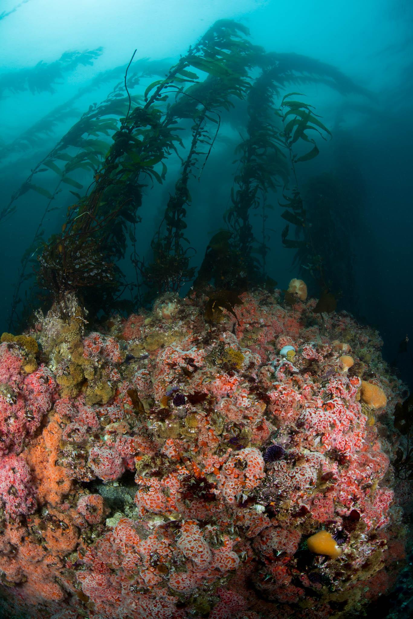 Aumentos Reef