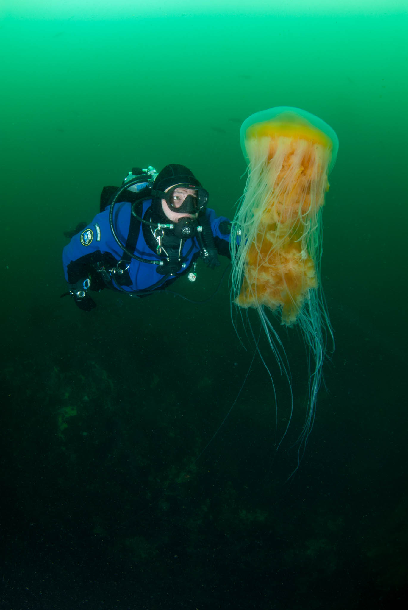 Diver and Jelly