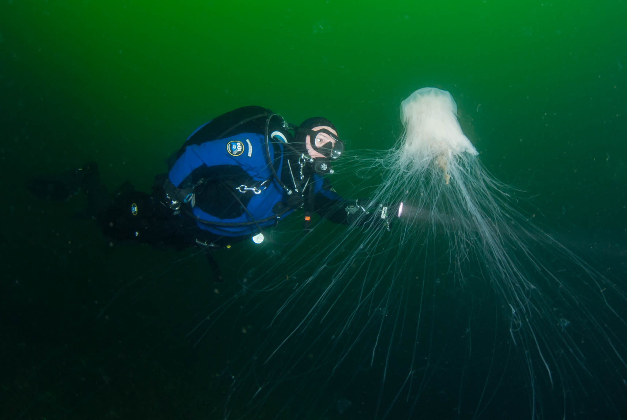 Dave and Lion's Mane Jelly