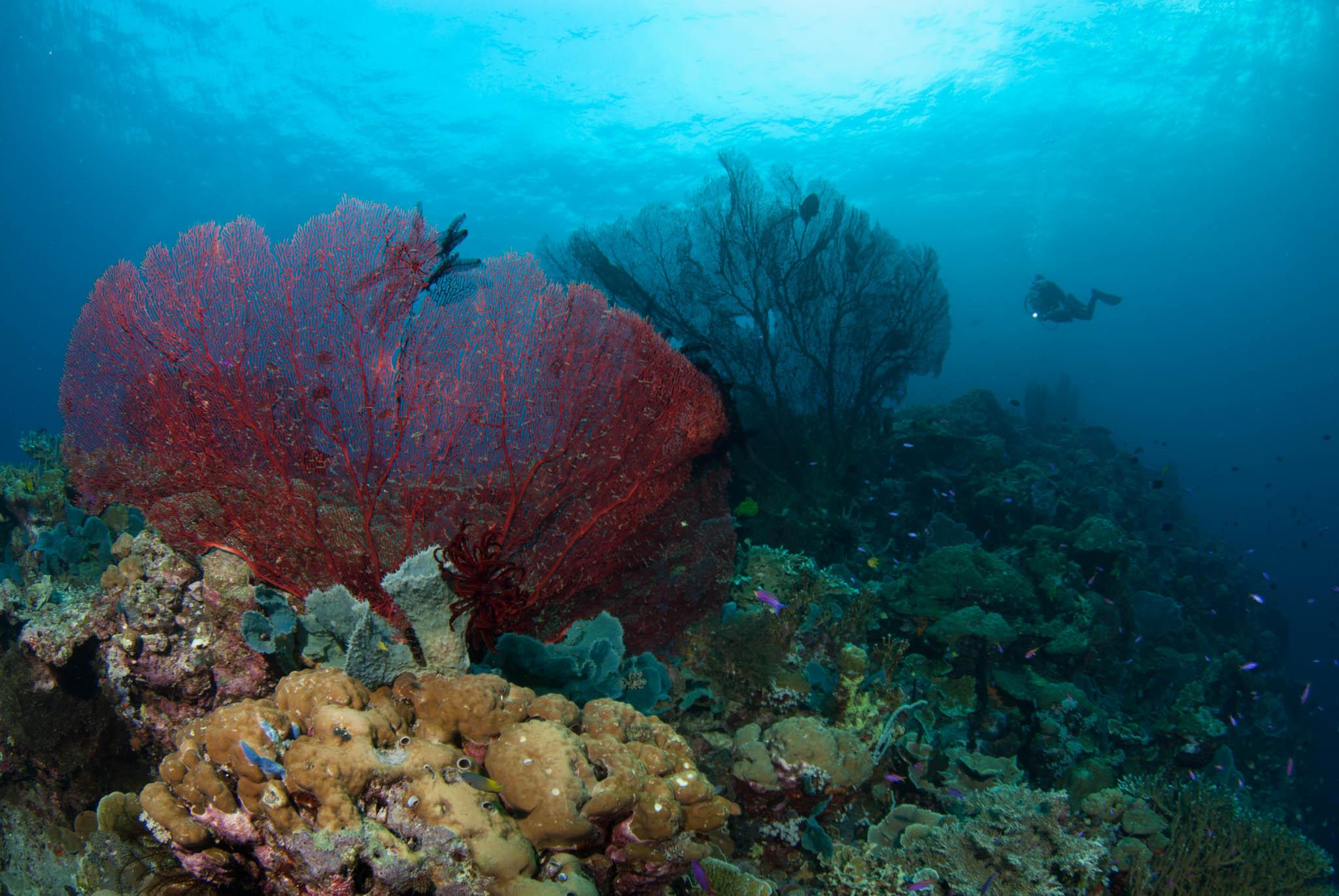 Susan's Reef