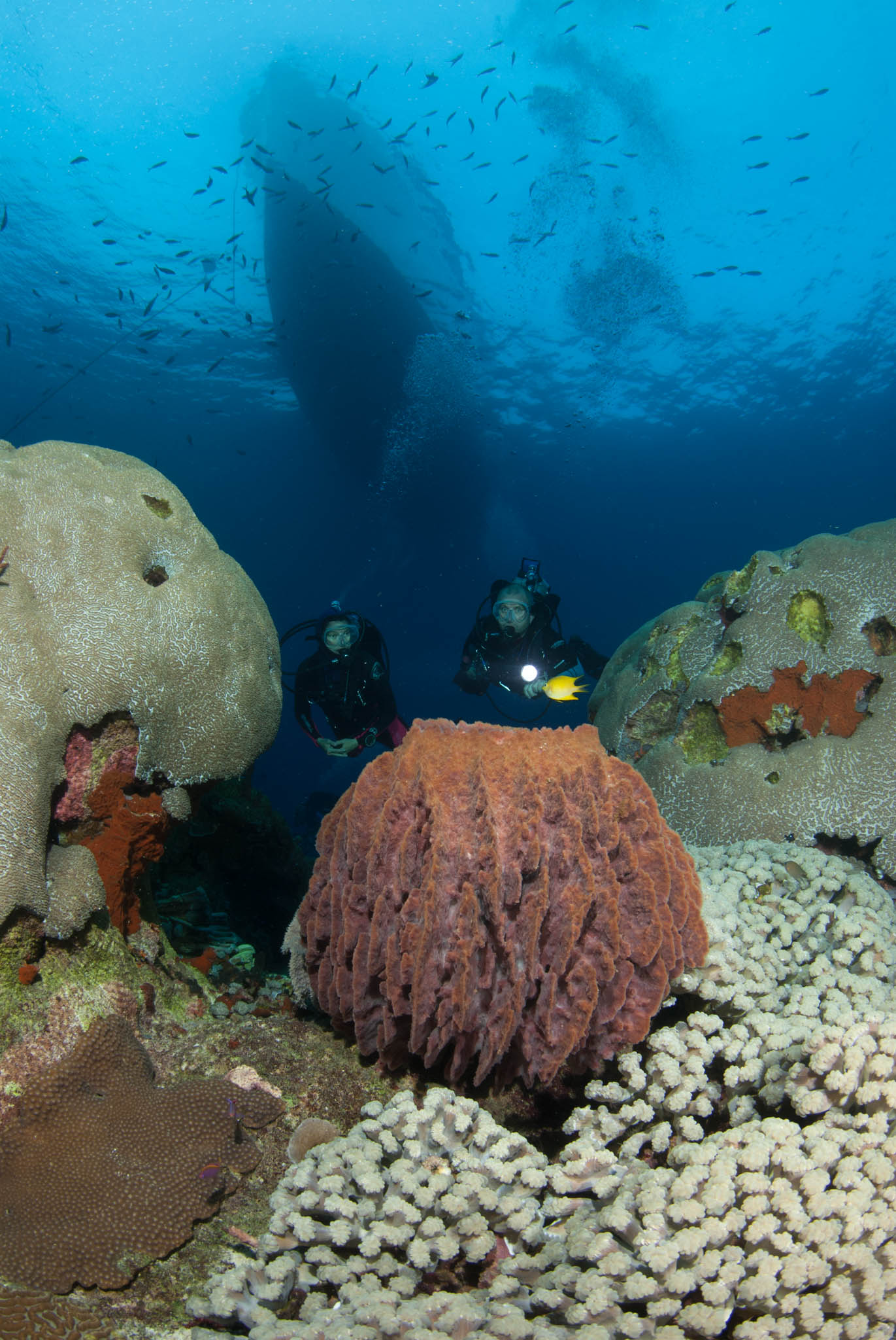 Divers and FeBrina