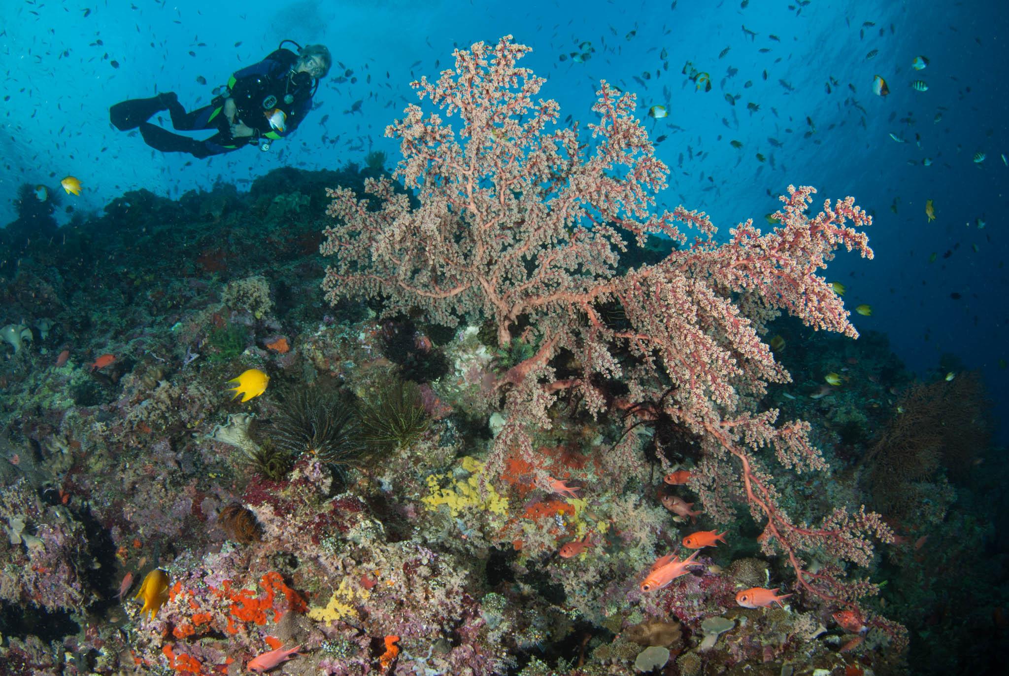 Krakafat Diving