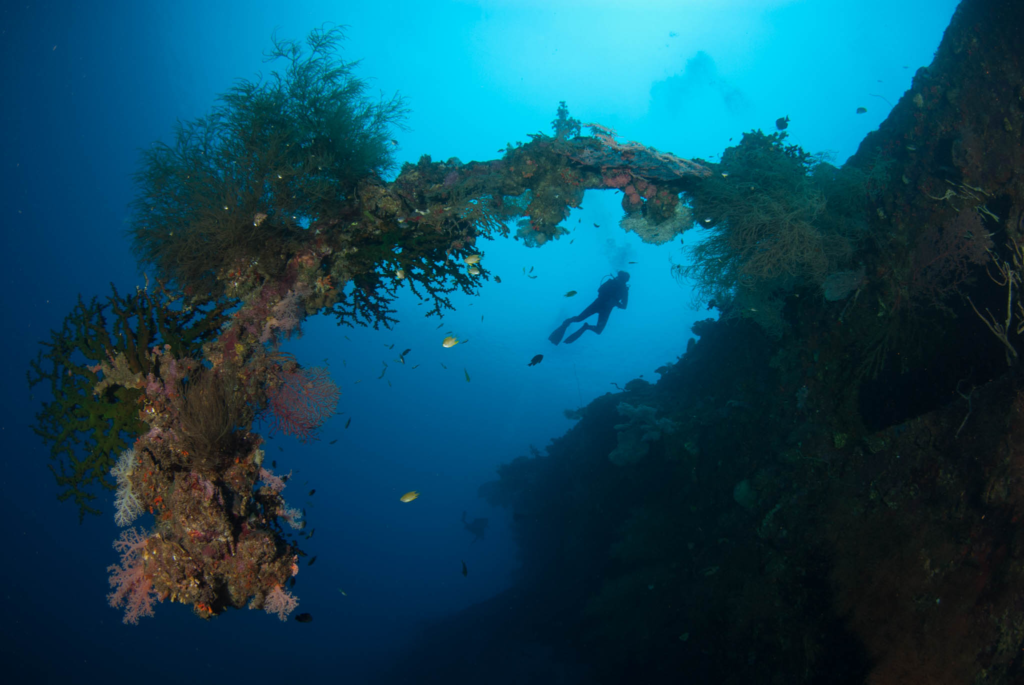 Dan Thomas on the Hirokawa Maru