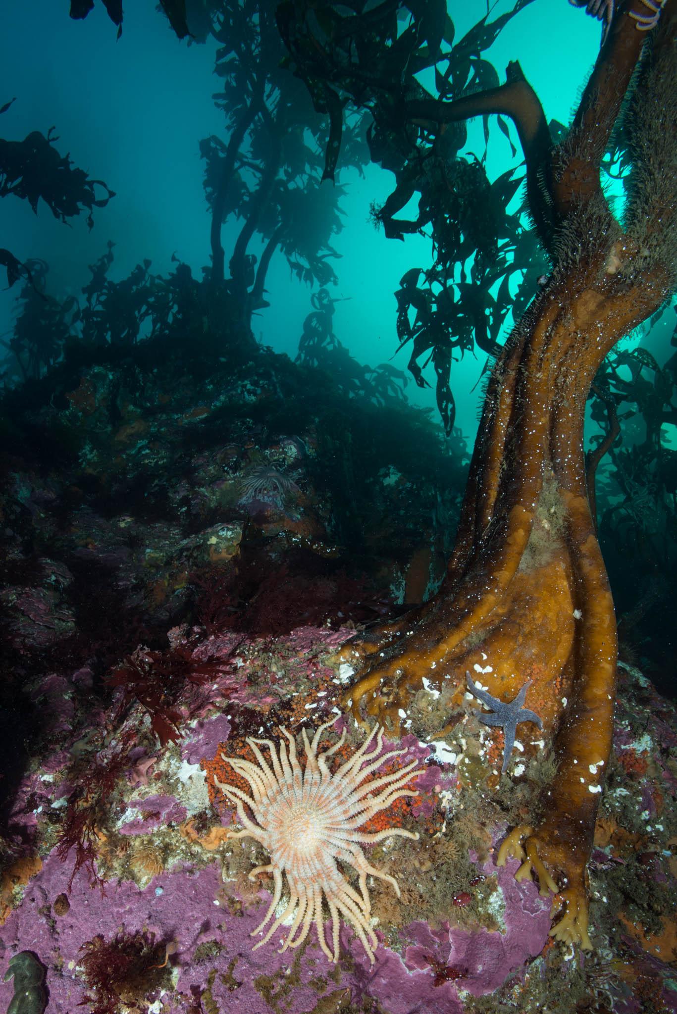 Falkland Islands Kelp Scene