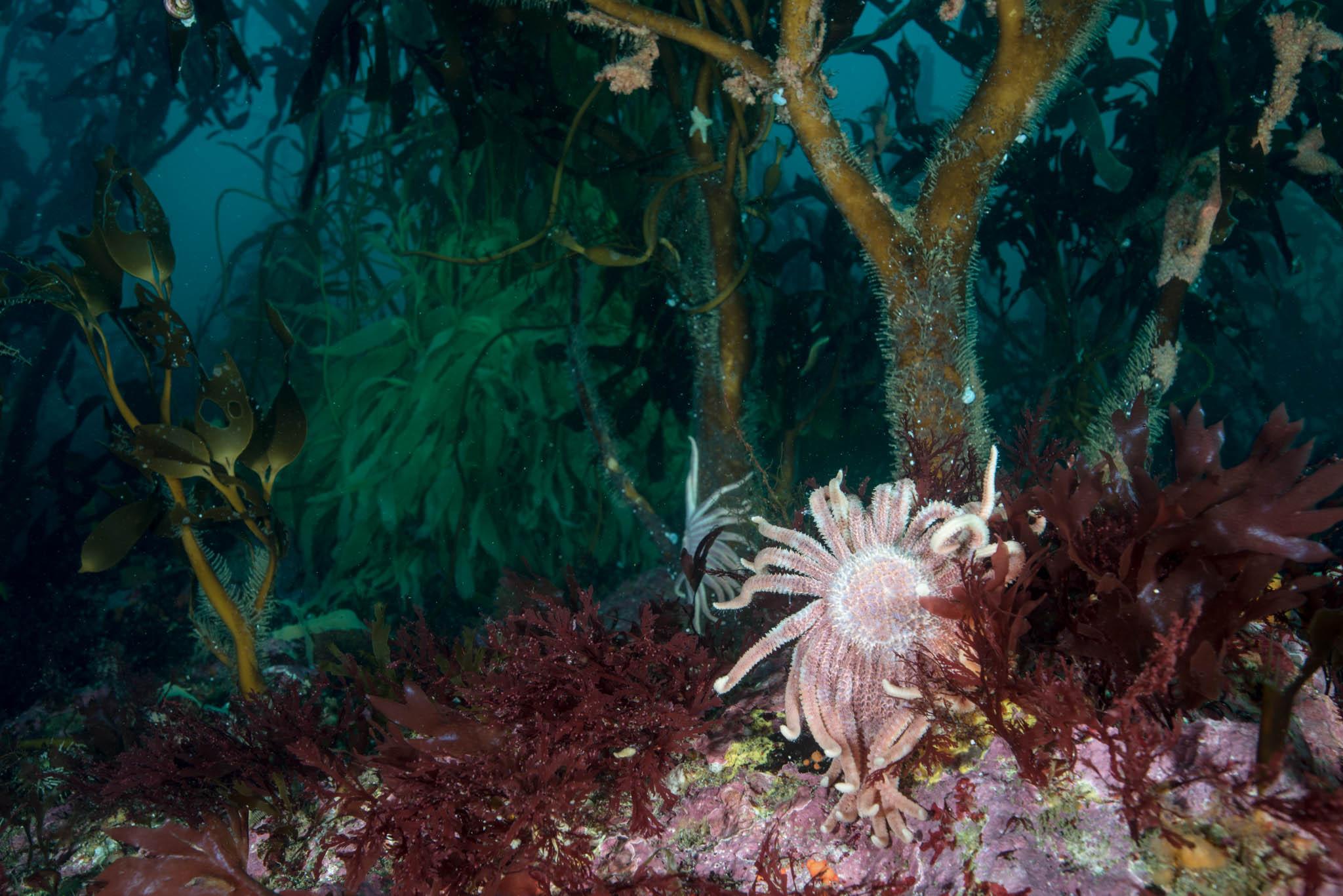 Falkand Islands Reef Scene