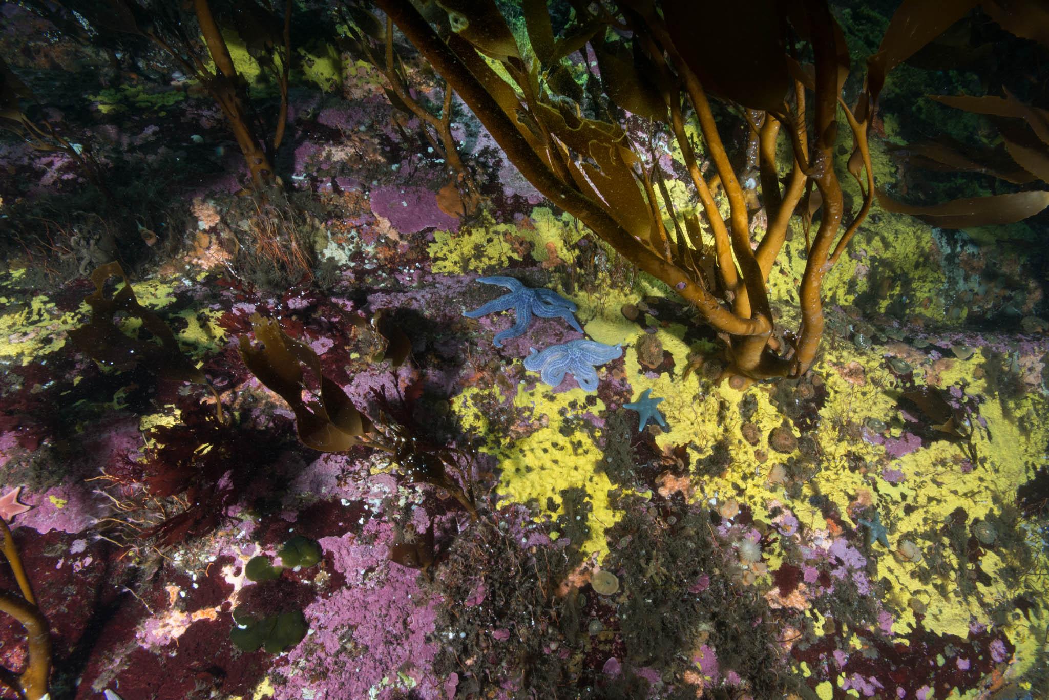 Sponges and Tree Kelp