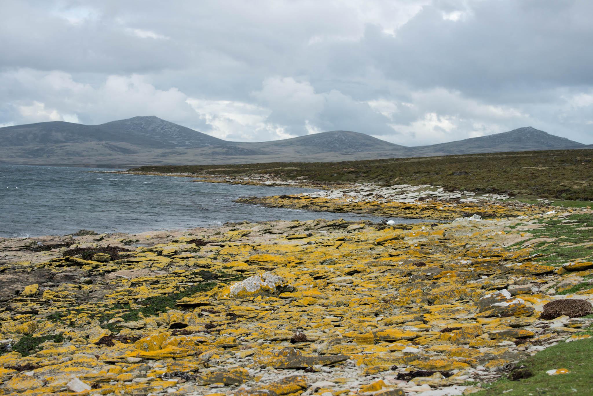 Lichens on the Beach