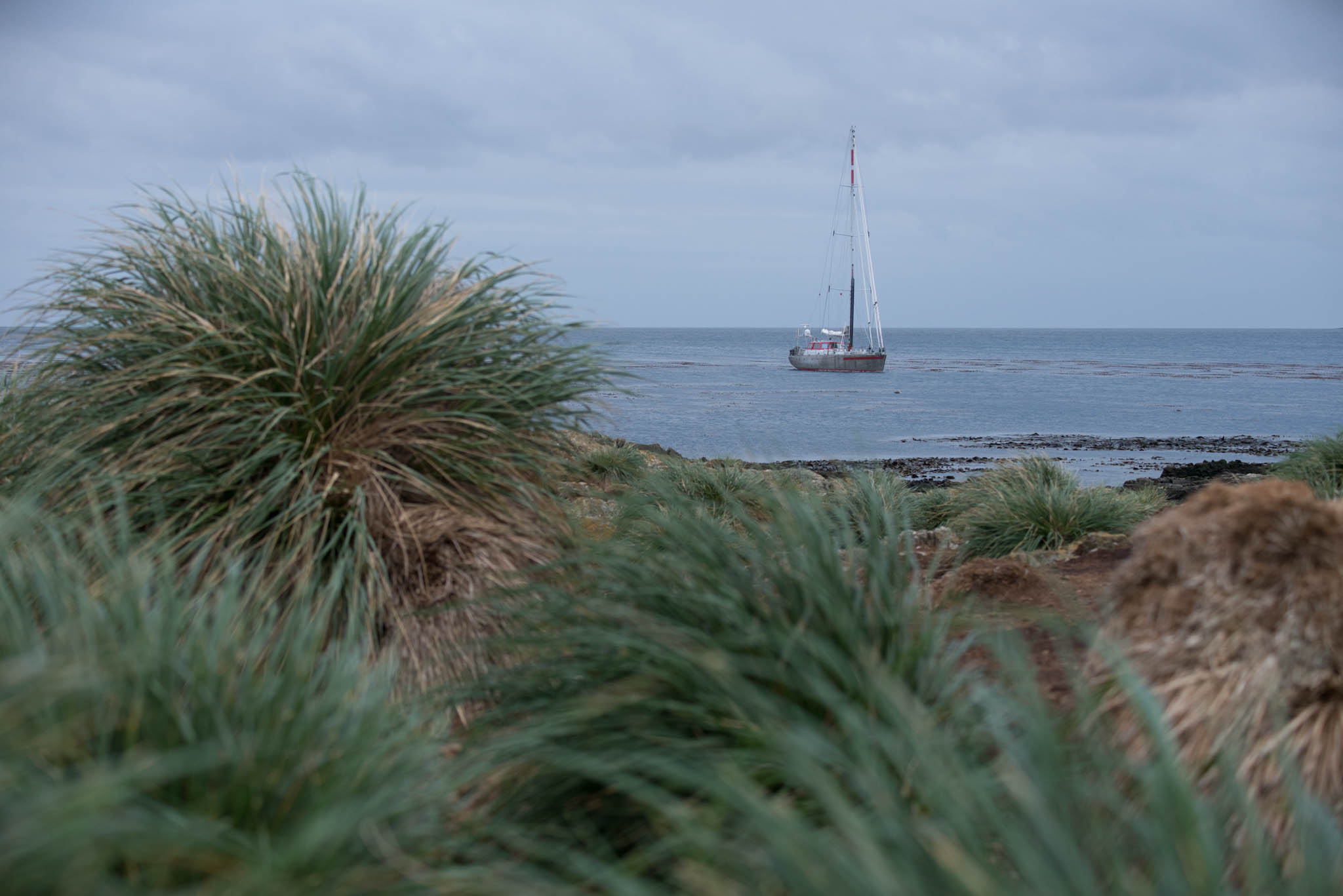 The Pelagic Australis at Steeple Jason