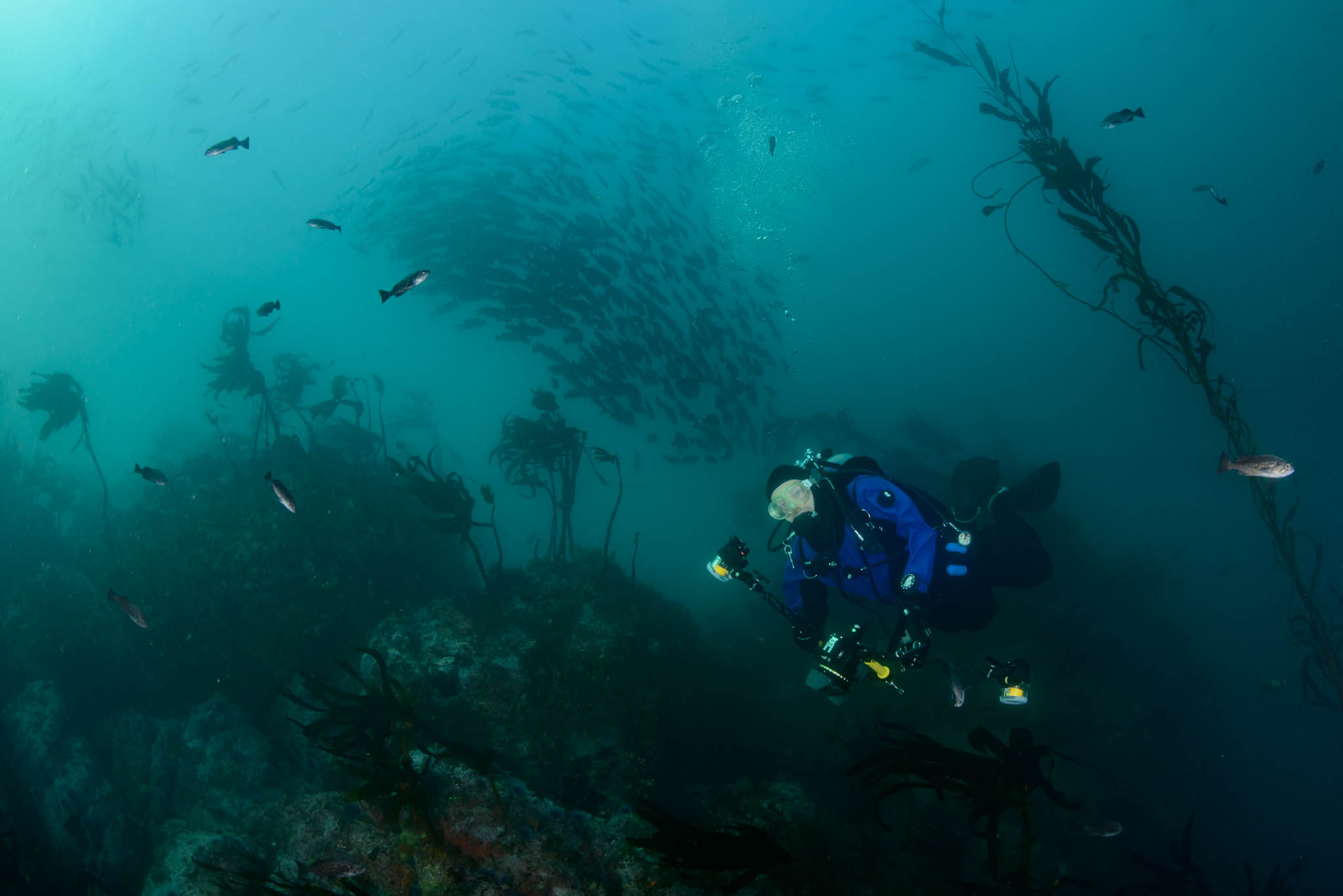 Sami Diving Point Lobos