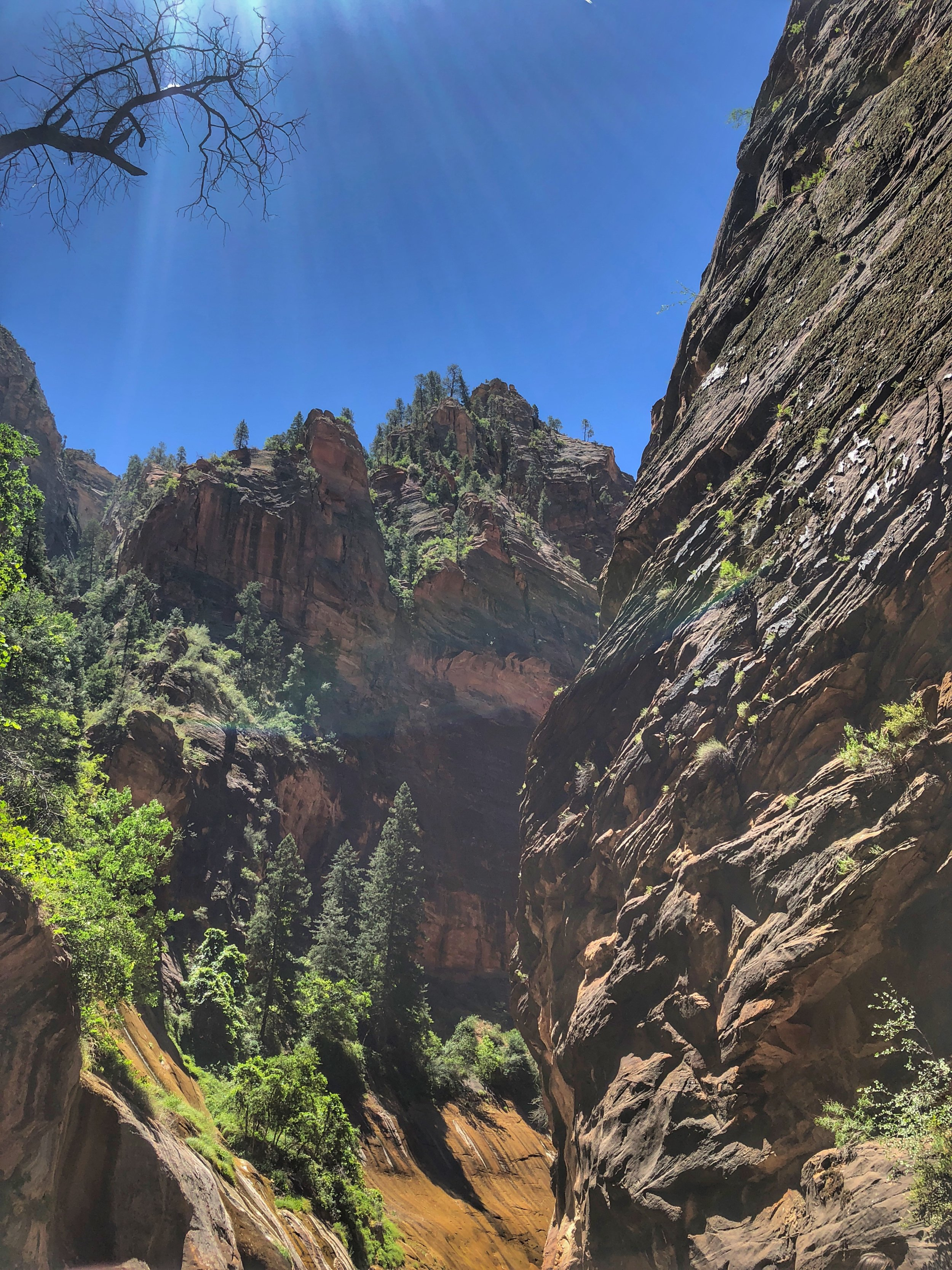 :: A look up in Zions @ The Narrows. This was our view::