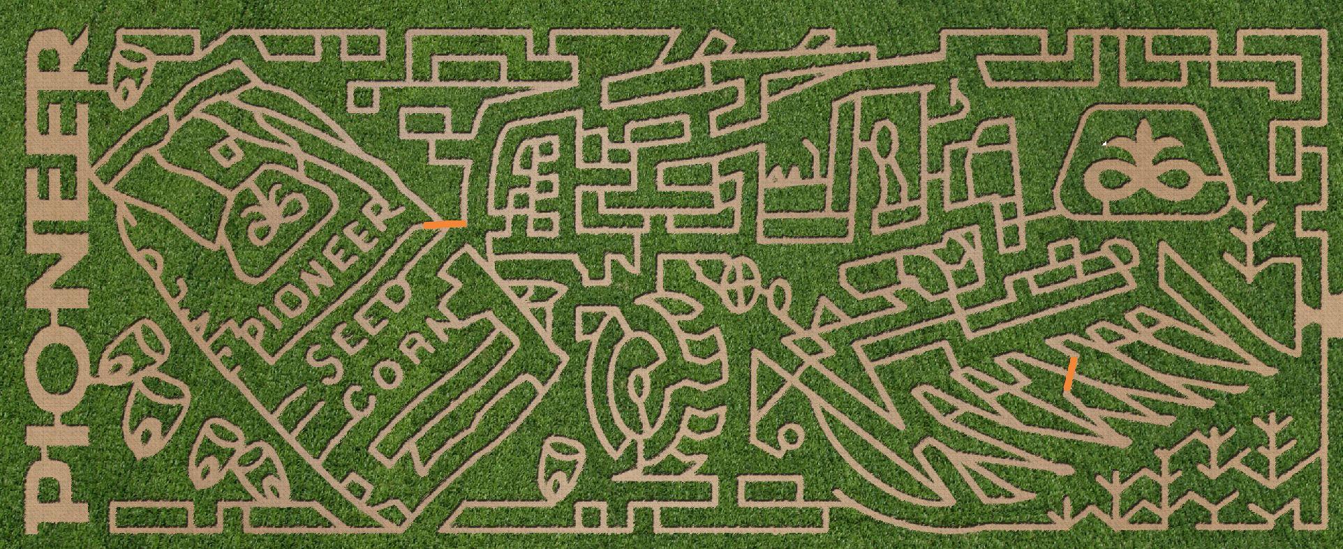 Maze 2010.JPG