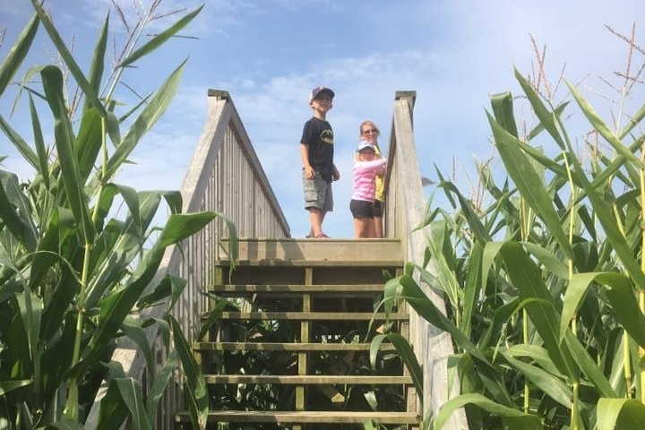 learning all about the coolness of corn! -