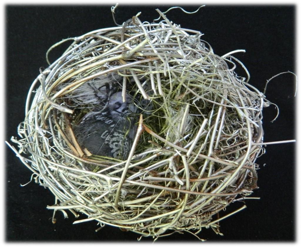 02_Nesting-Joel-1.jpg
