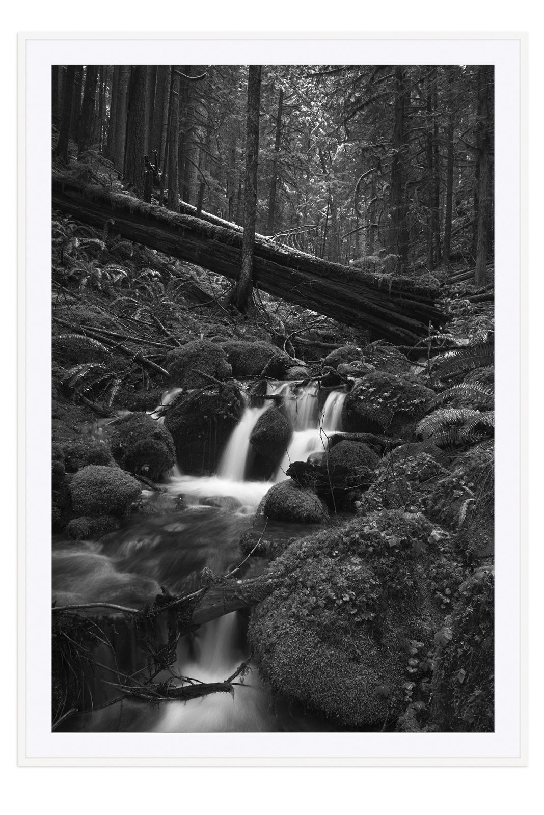 L1002821 framed - white.jpg