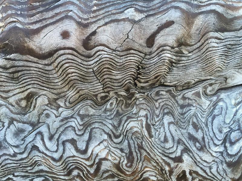 Wood grain on beach log. Olympic peninsula.