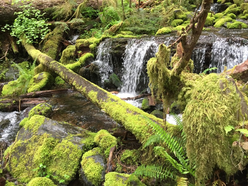 Olympic National Park/Forest, Temperate rainforest stream