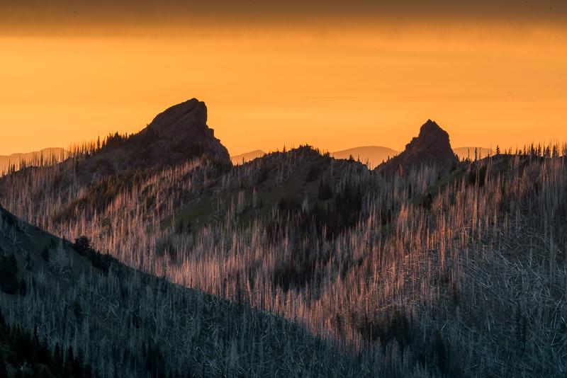 Old Wildfire Burn, Hurricane Ridge (back side)