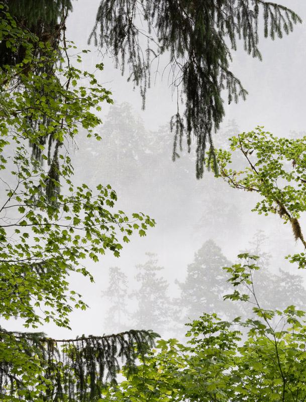 Window to Foggy Mountainside