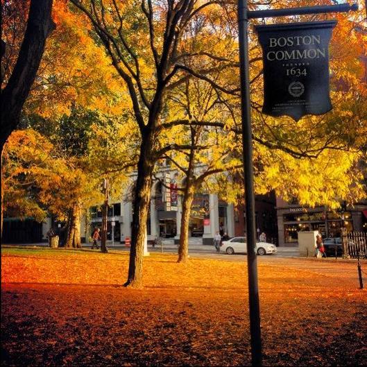 Boston Common Massachusetts Fall Foliage.jpg