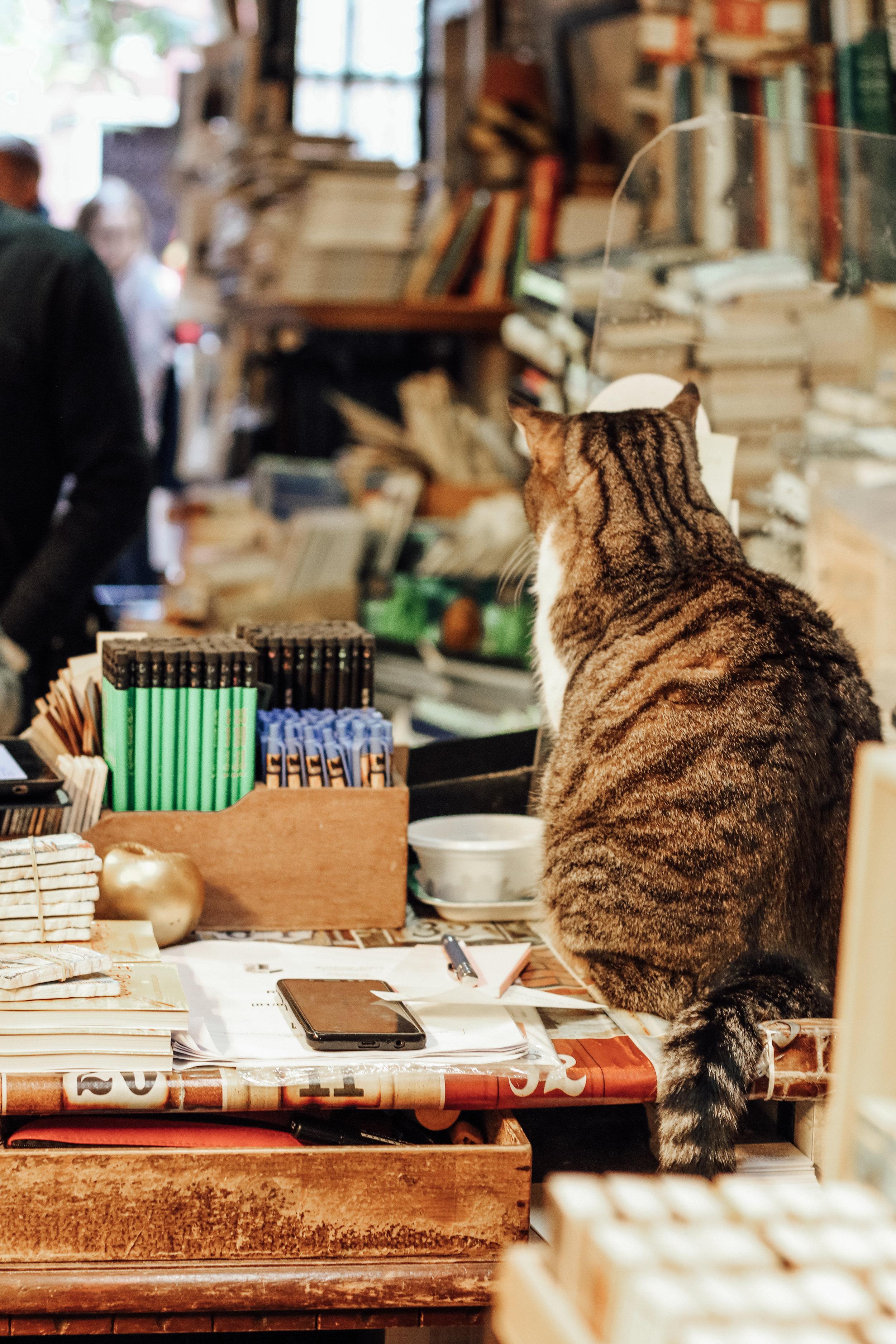 Libreria Acqua Alta Cashier Cat.jpg