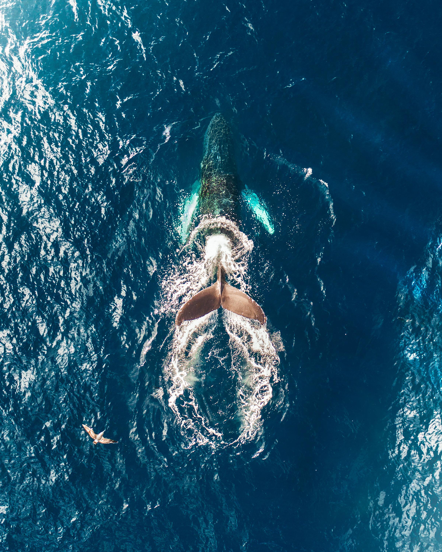 6-Whale Tail.jpg