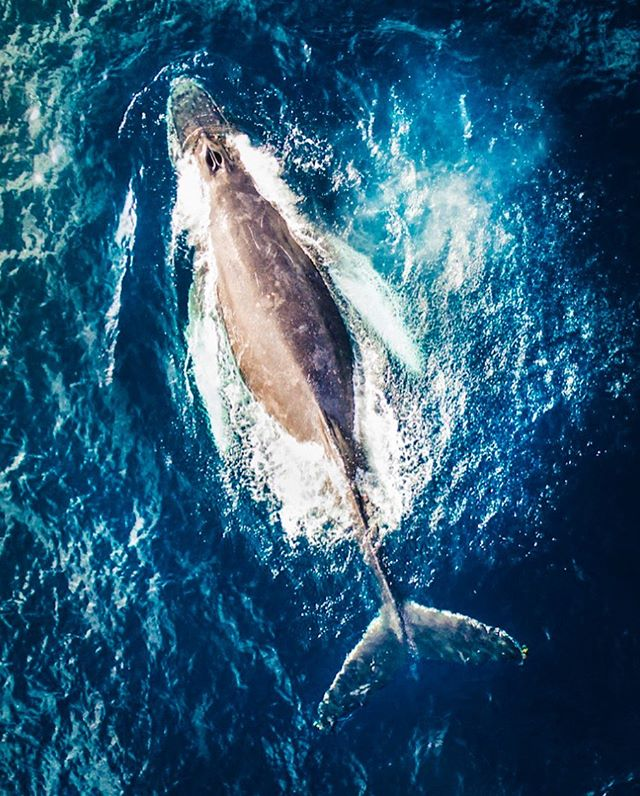 GIVEAWAY TIME: The ninth and tenth Droning With Whales & Dolphin Workshops are coming up THIS weekend left for those wanting to officially book it! Check out the link in my bio for more info. You DON'T need to own a drone to attend it!  I'm giving away a spot for this Sunday's workshop in Dana Point. 1. Tag one friend and follow me. (Each tag is a new entry, TAG AWAY) That's it. Winner will be picked and announced tomorrow morning with a post.  Value: $800 (with the swag bag of goodies). — Can't afford the entire cost, but want to attend one this weekend? DM me! — Tasty Tune: Throwaway by SG Lewis (feat. Clairo)