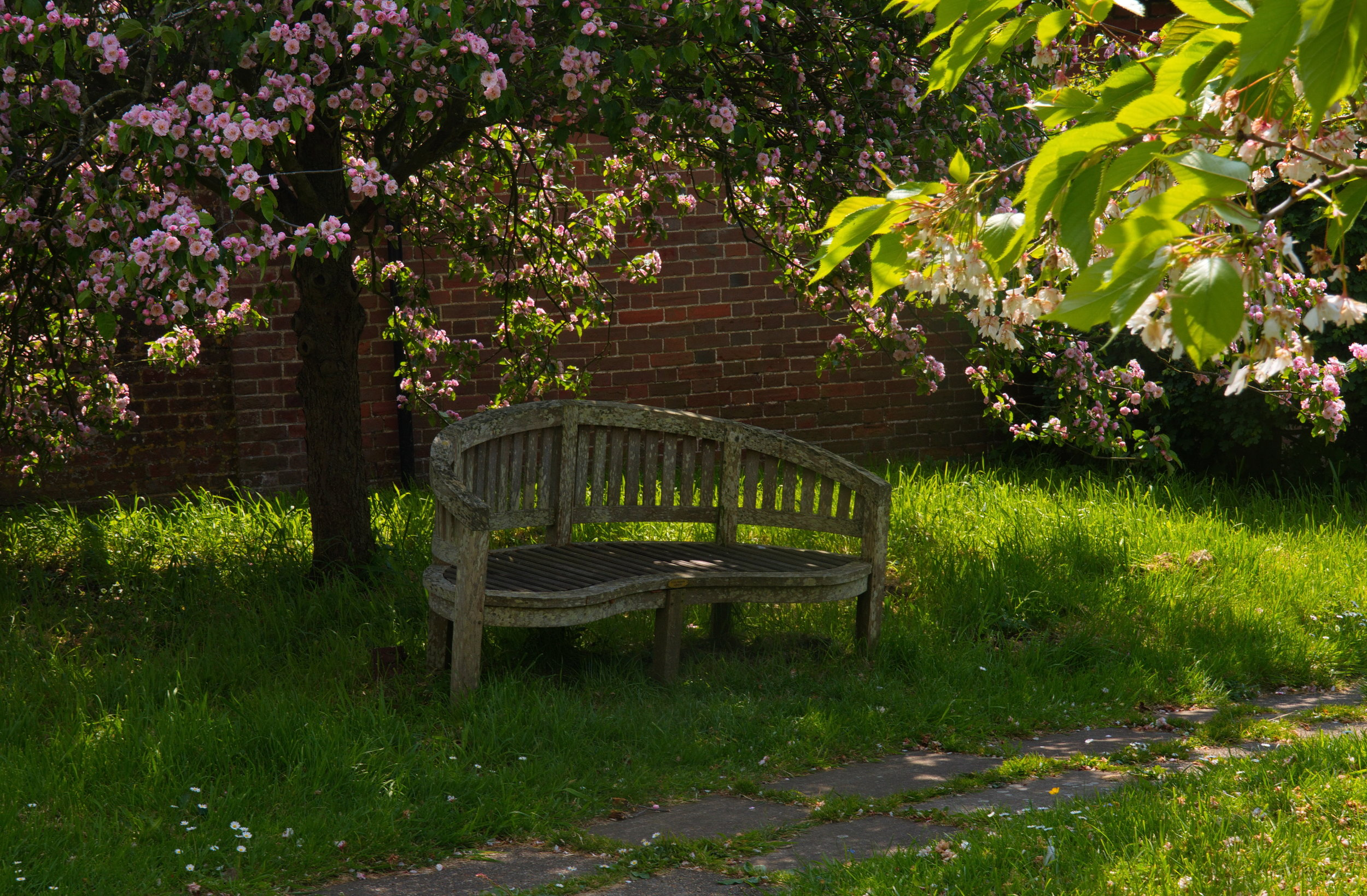 bench-in-st-margarets-churchyard-hothfield_46480389005_o.jpg