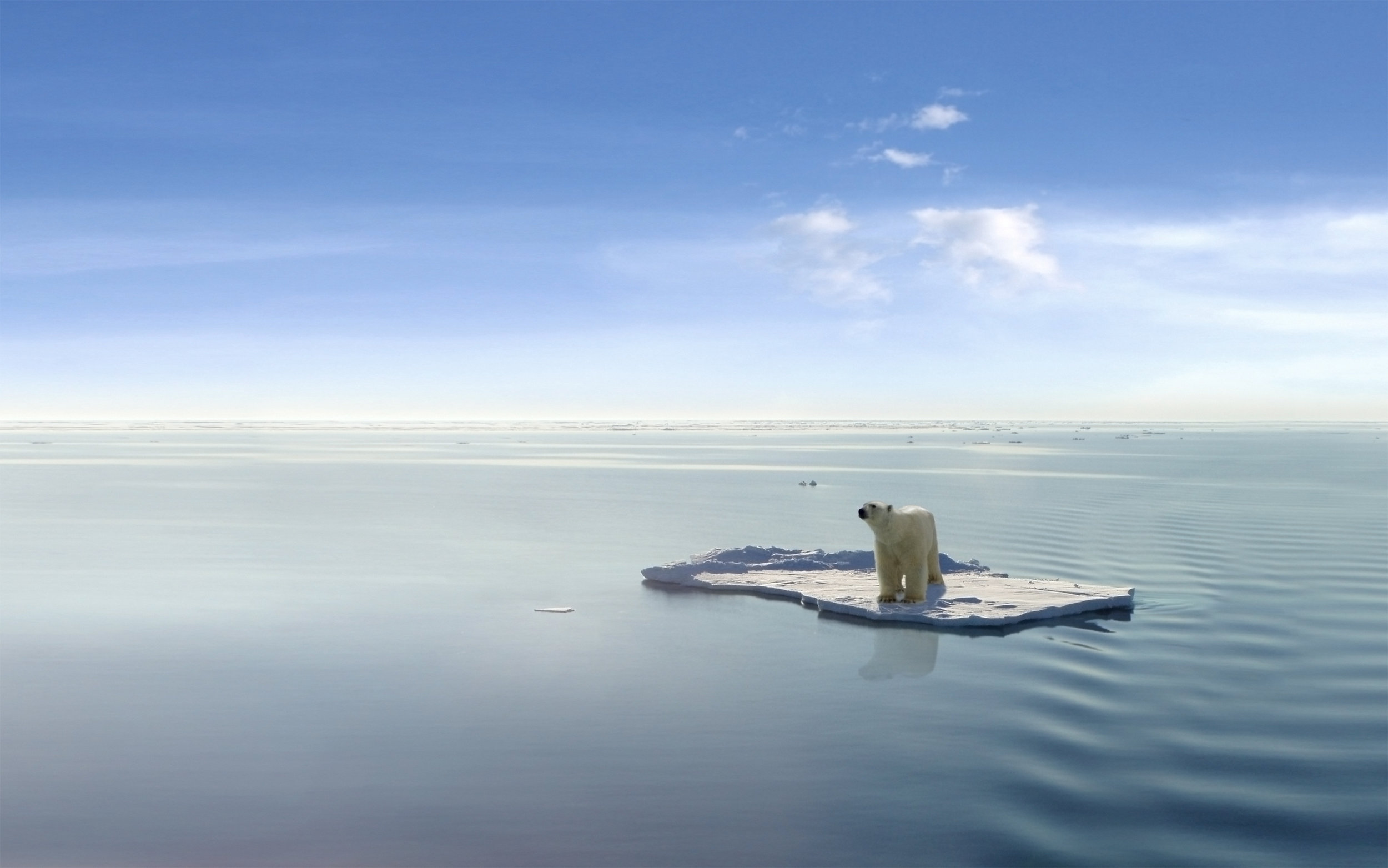 bigstock-Polar-bear-on-an-ice-floe-15030044.jpg