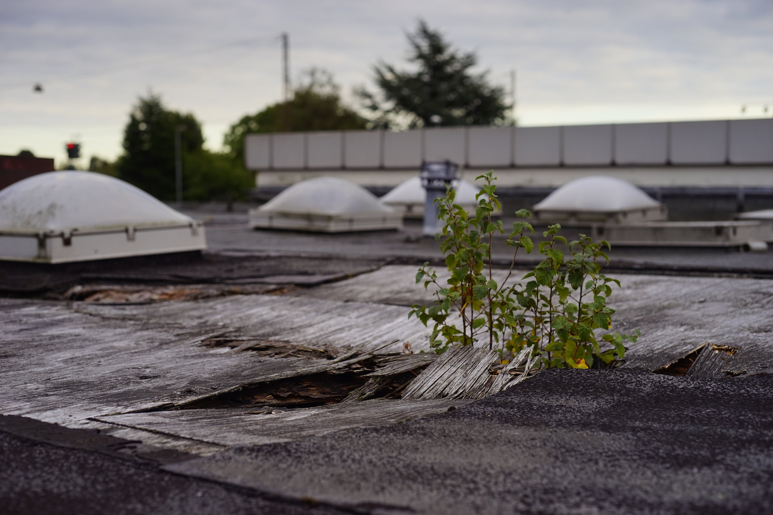 En plante skyder op af den nu nedrevne tankstation i Rundhøj