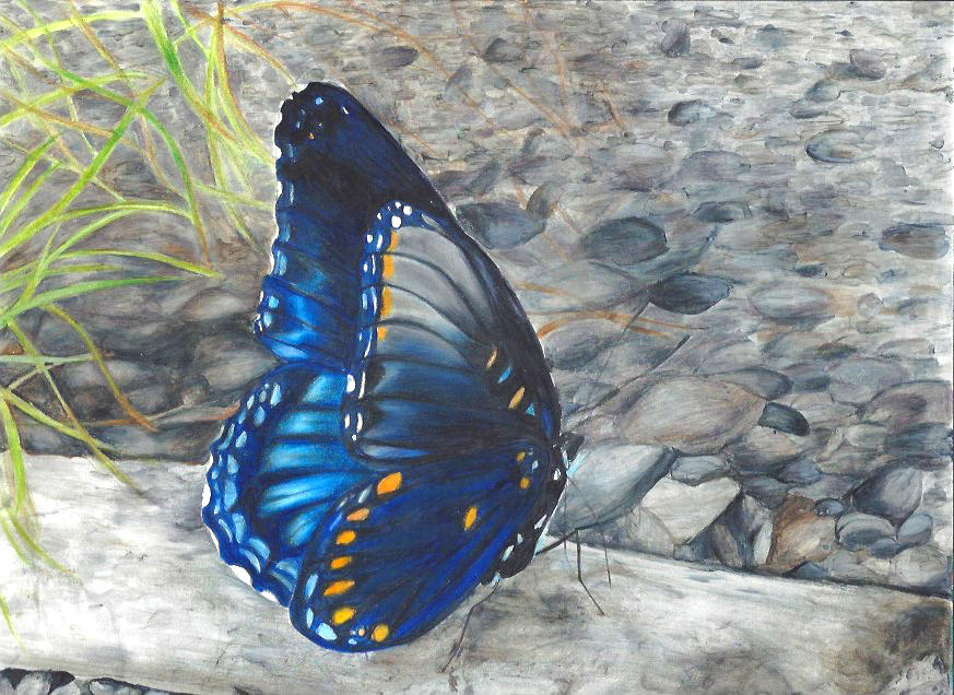 Animal Blue Butterfly.jpg