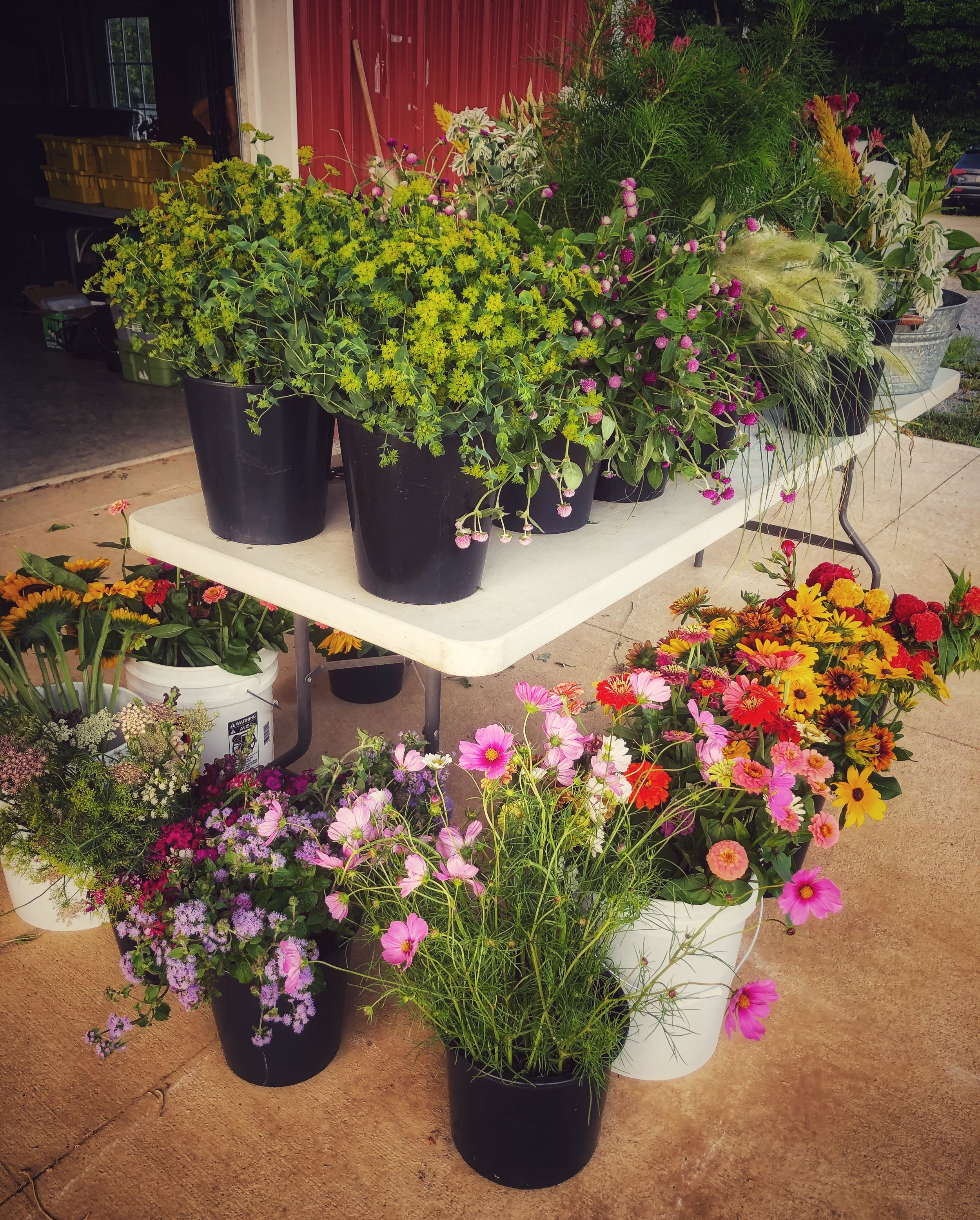 Wholesale locally grown flowers