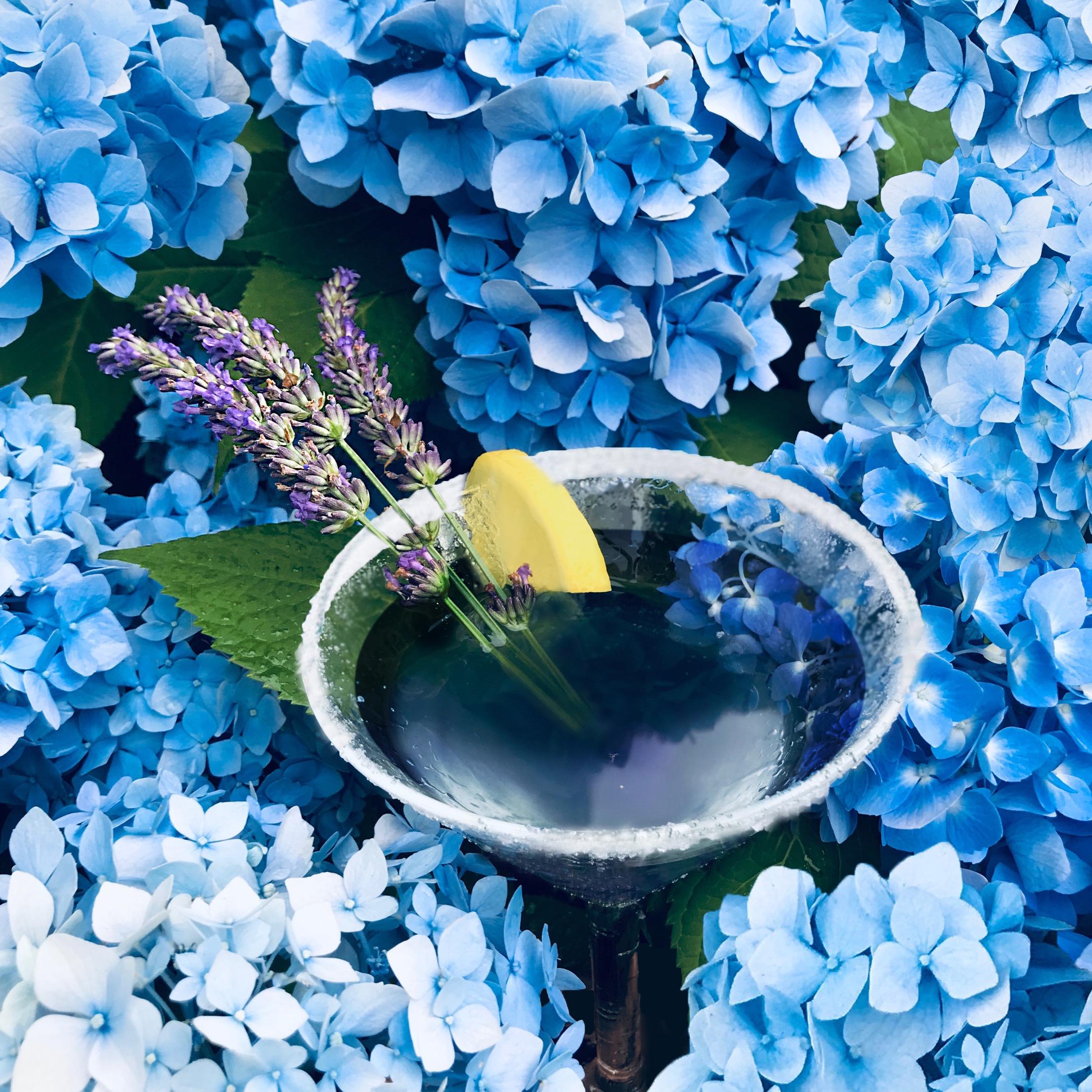the-flats-lavender-citrus-martini.JPG