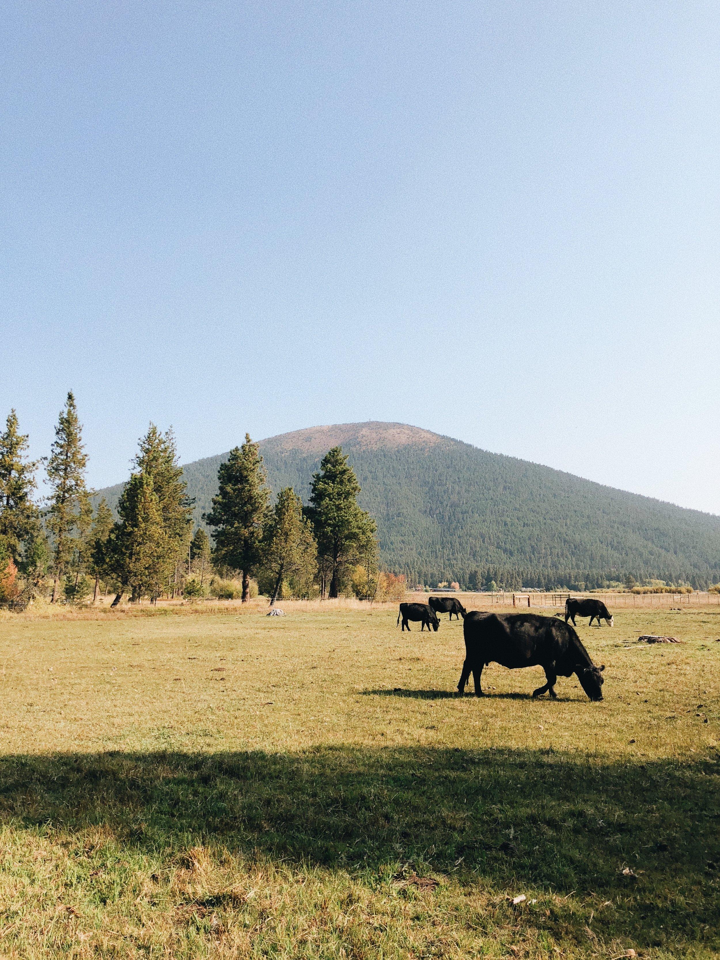 Black Butte, Oregon