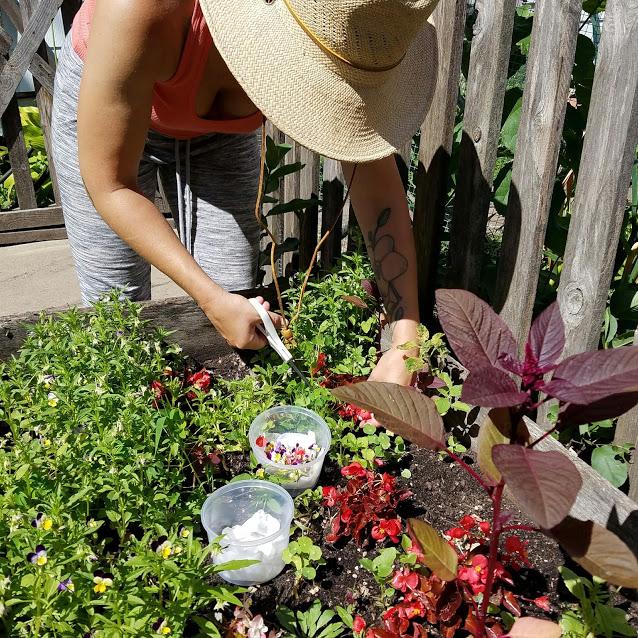 Picking herbs.jpg