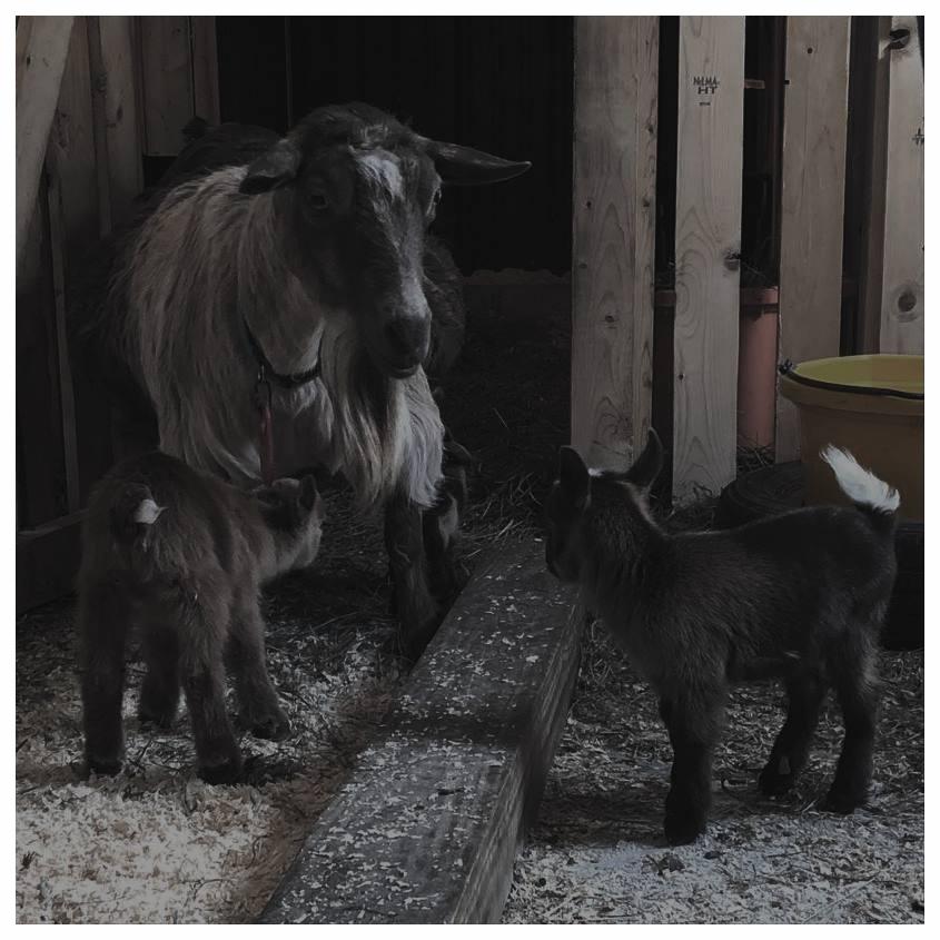 Meet The Herd -
