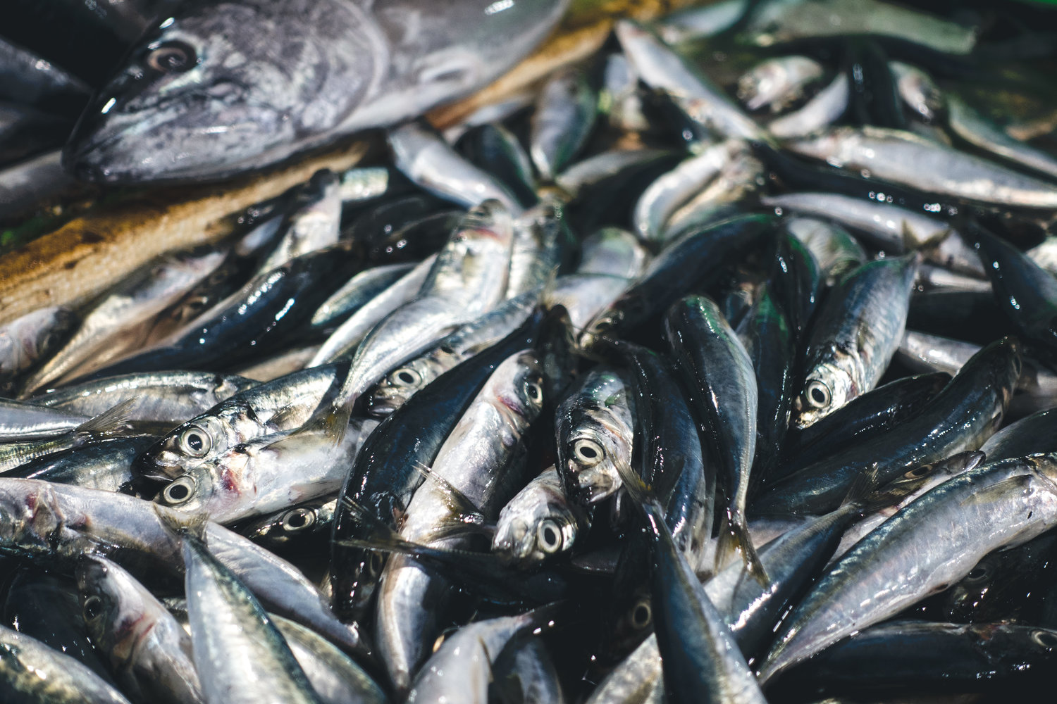 Toxicity of Fish and Seafood