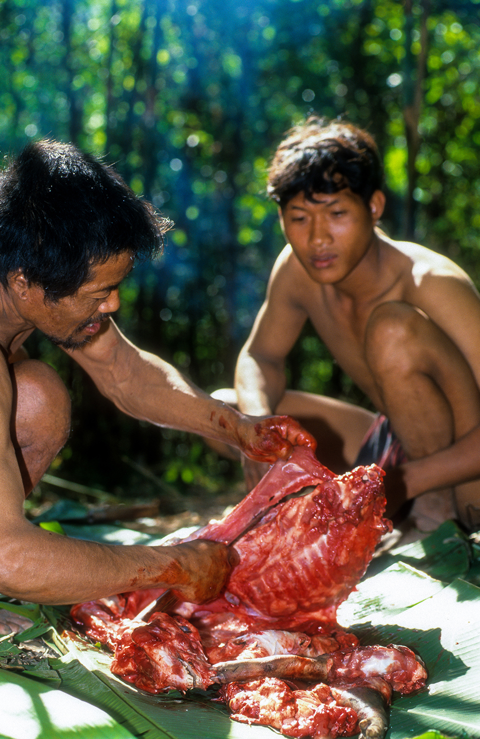 Freshly killed and butchered wild pig with the Mlabri Hilltribe (Yellow leaf people). Thailand. 1997 (LC).jpg