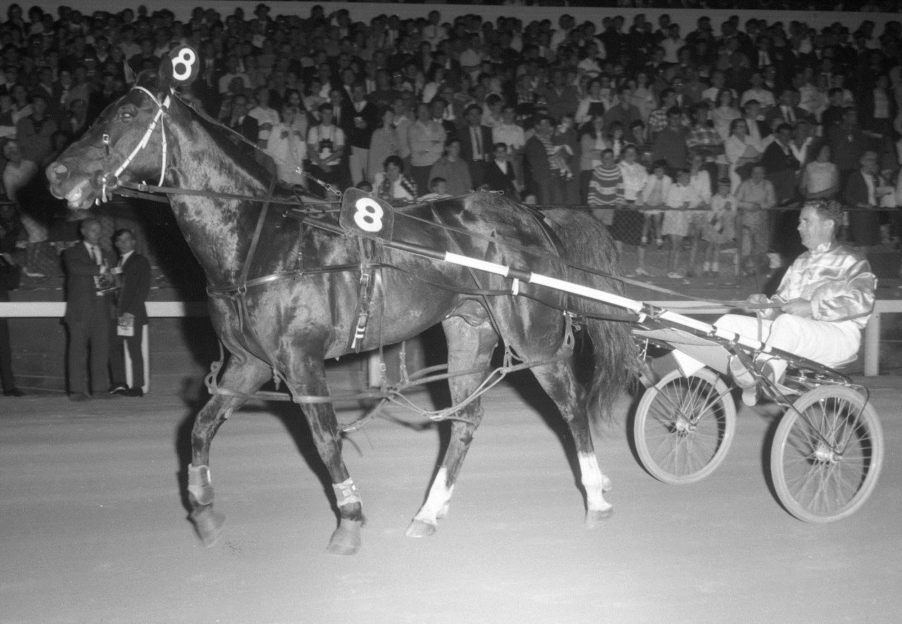 Image courtesy of National Trotguide. (Halwes and the great Kevin Newman).