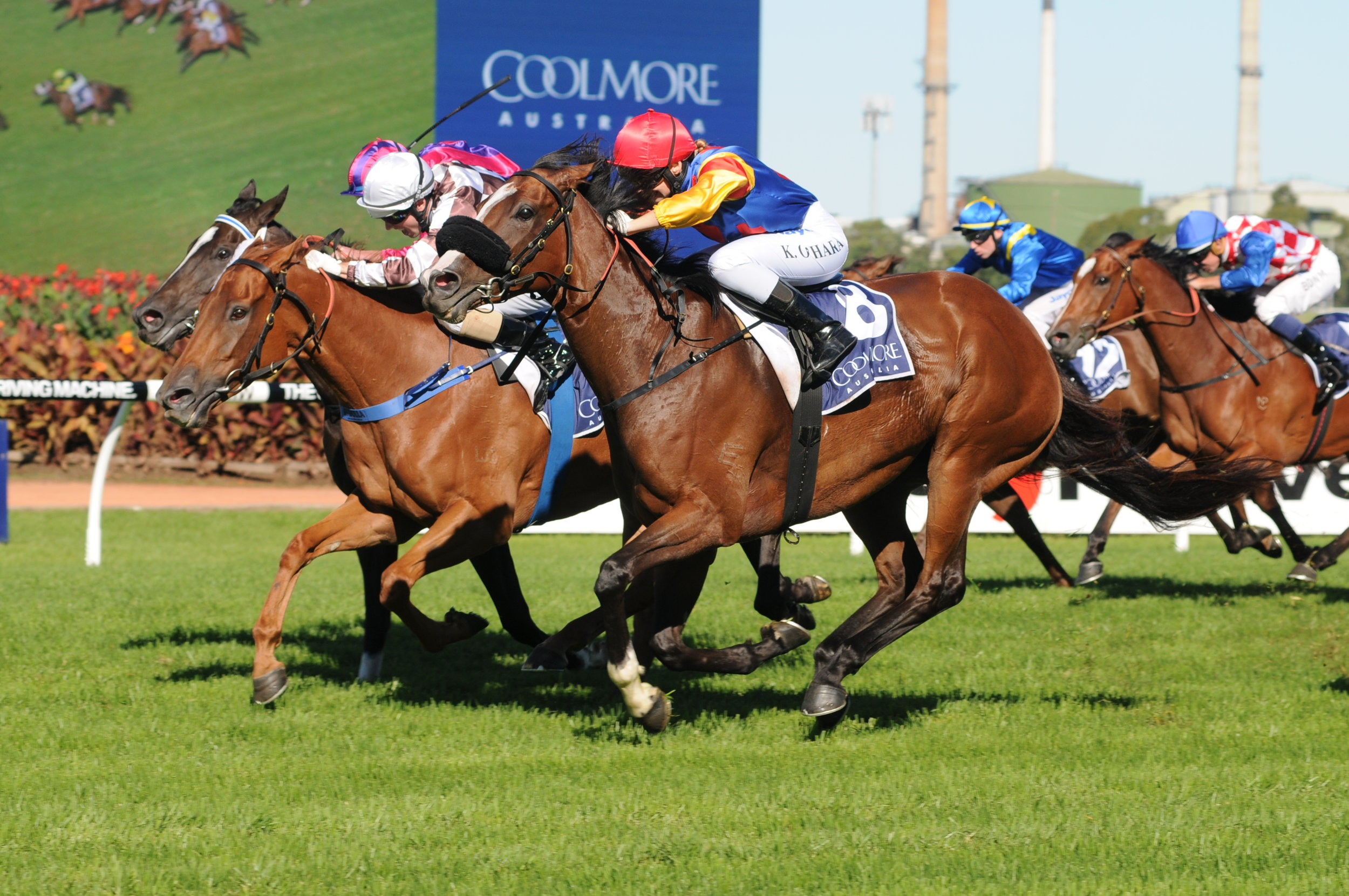 Image Courtesy of Steve Hart Photographics - Ofcourseican wins Coolmore Classic