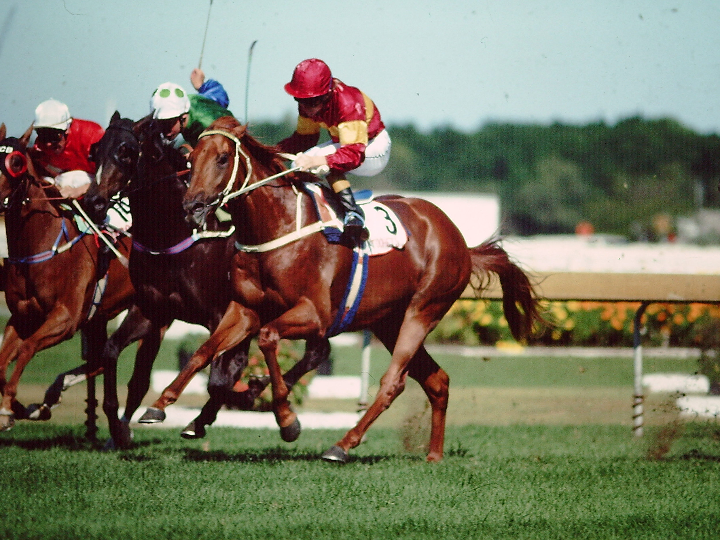 Image Courtesy of Steve Hart Photographics - Tierce wins 1991 Golden Slipper