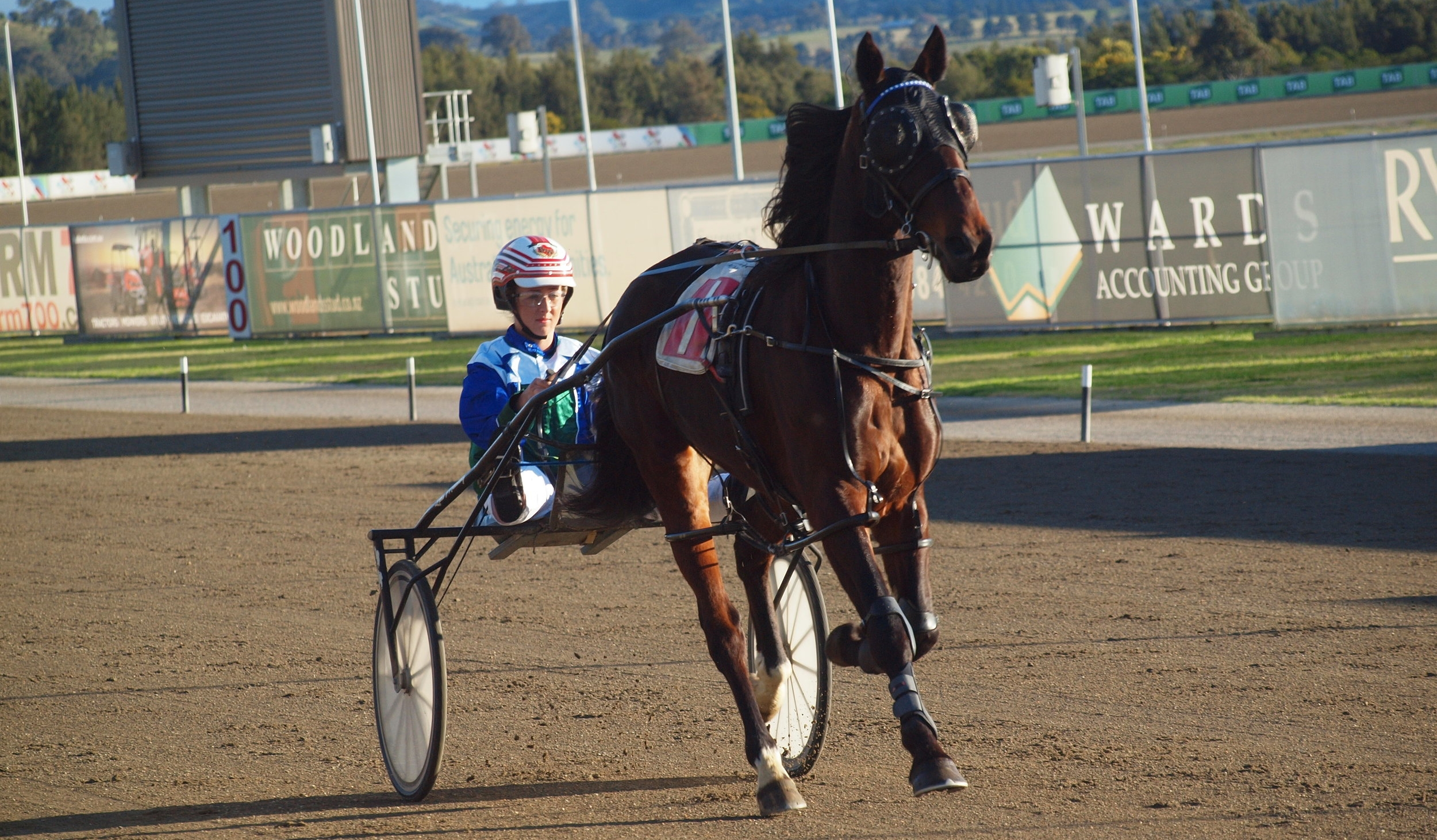 Image courtesy National Trotguide - Brooke driving Bells Beach House for the John McCarthy stable.