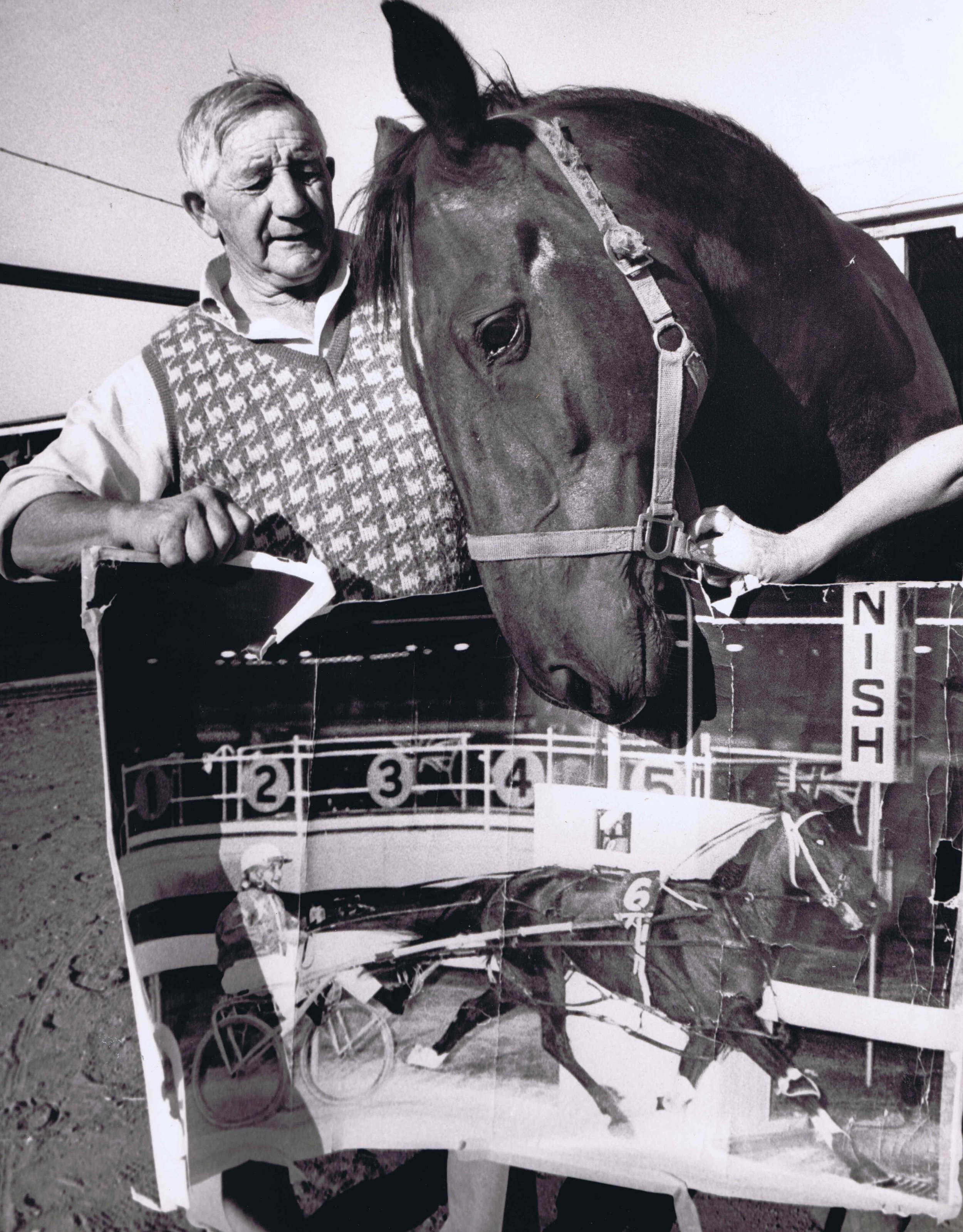 Image courtesy National Trotguide - Bold David and Alf Simons reflecting on their 1970 Interdominion win.