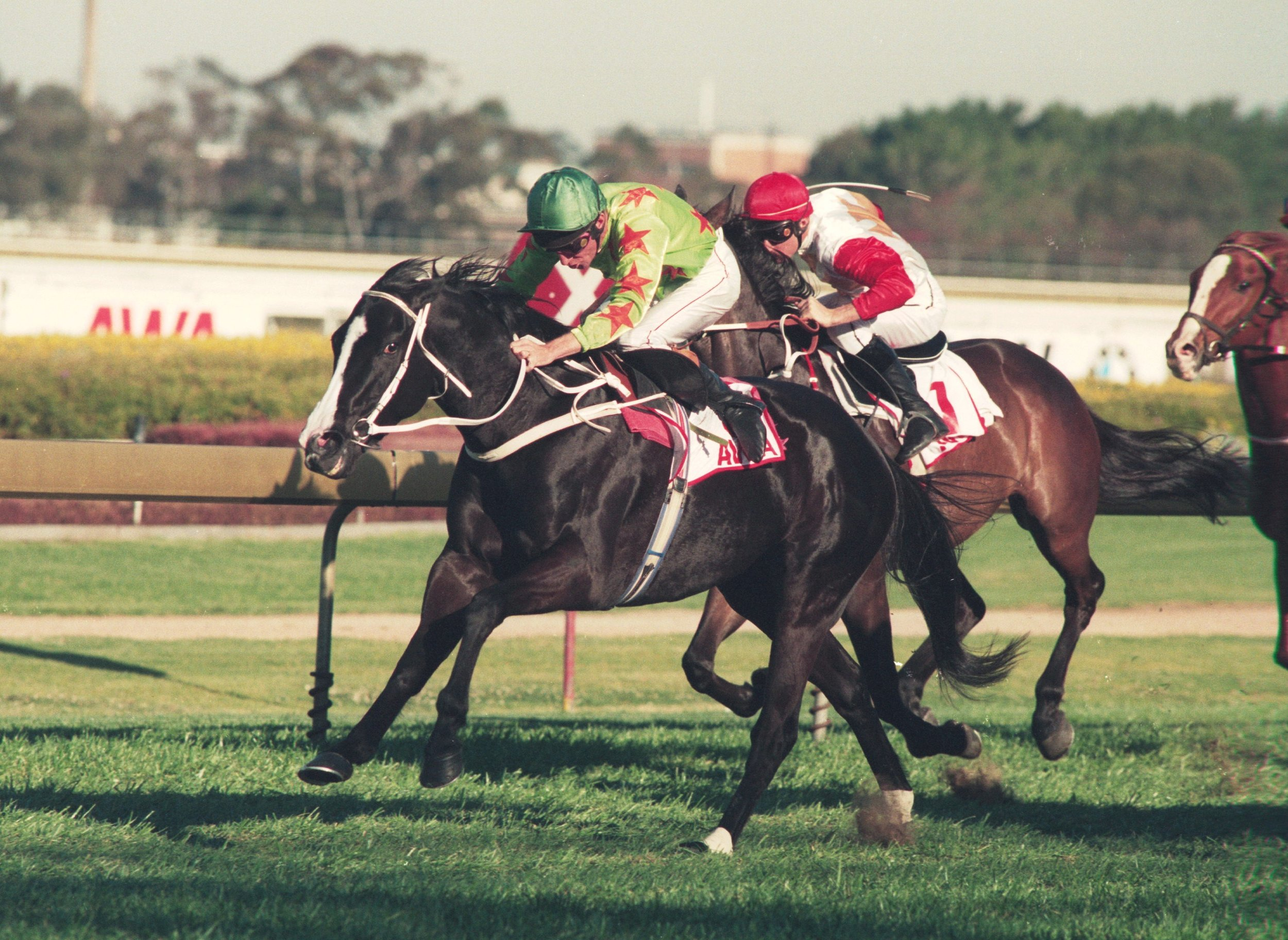 Image courtesy Steve Hart Photographics - A bonny mare - the gallant Slight Chance in her final win, the Hill Stakes.