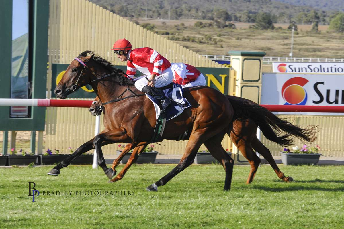 Image courtesy Bradley Photographers - Tash strikes the quinella with Al Mah Haha and Bocelli in the qualifier.