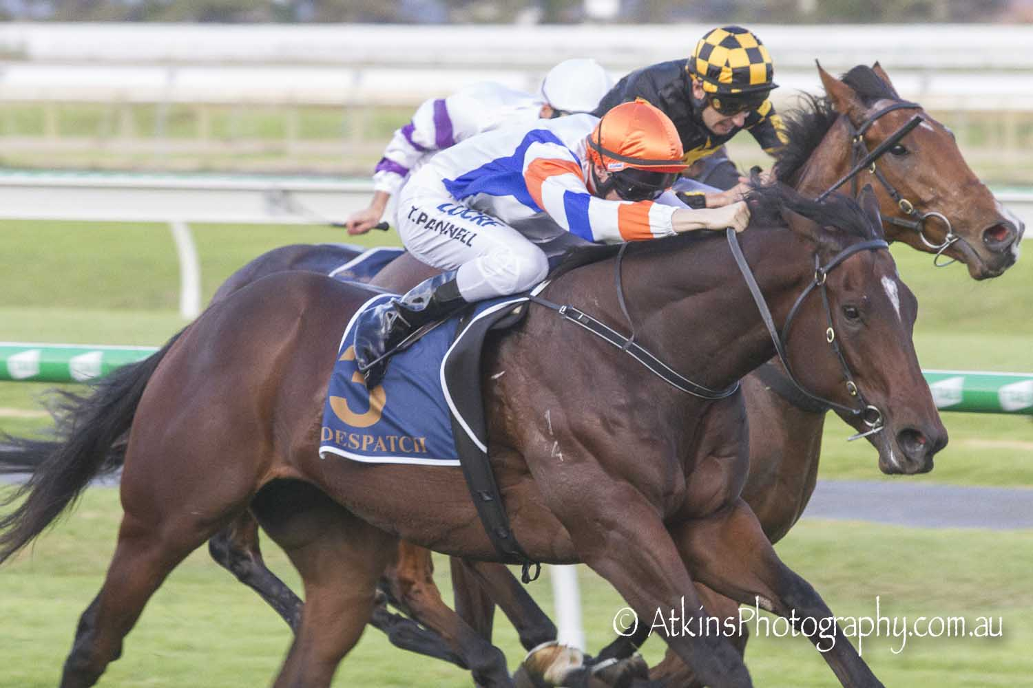 Image courtesy AtkinsPhotography.com.au - Poetry in motion - Todd Pannell coaxes Despatch to a narrow win in the Goodwood Handicap.